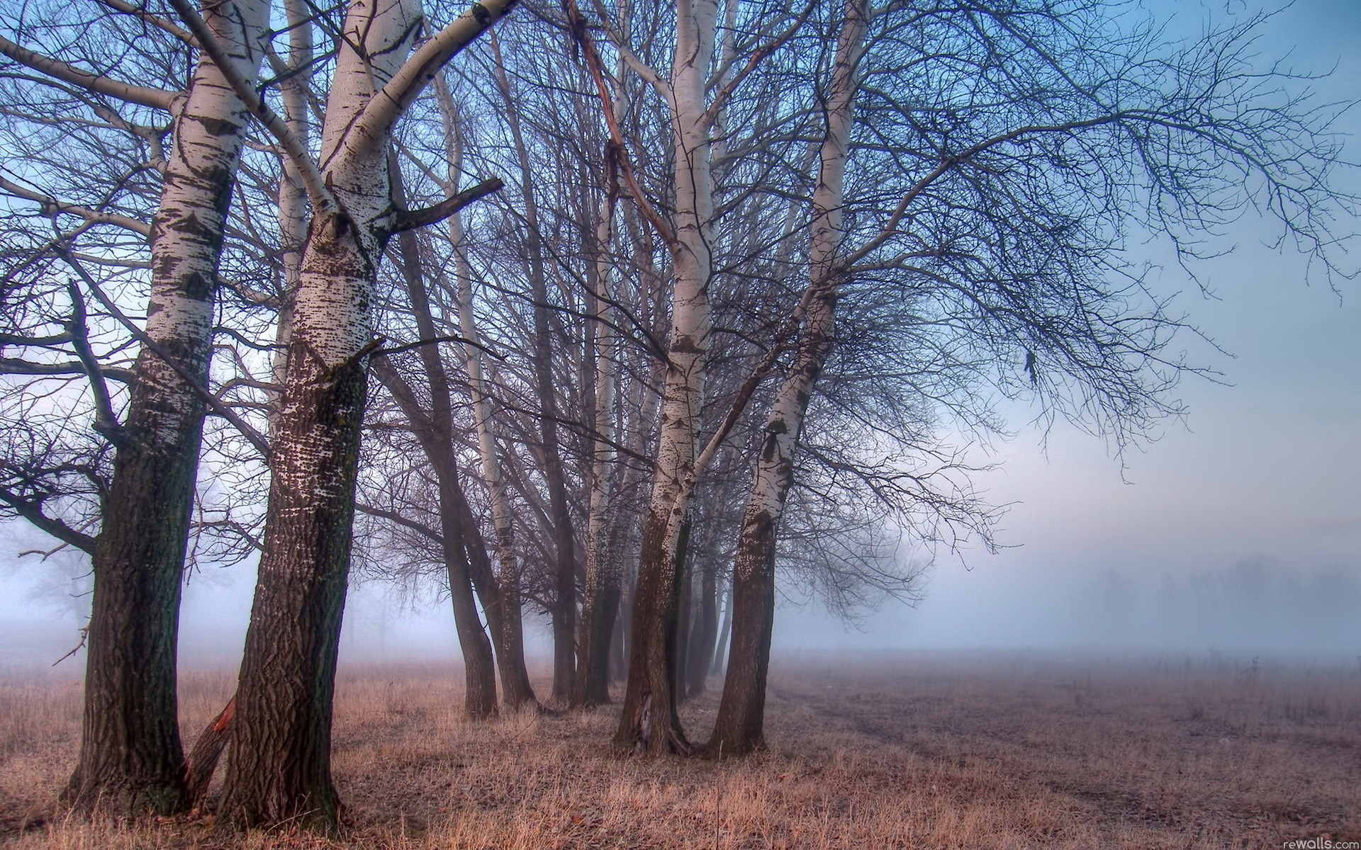 Landscapes nature Trees fog
