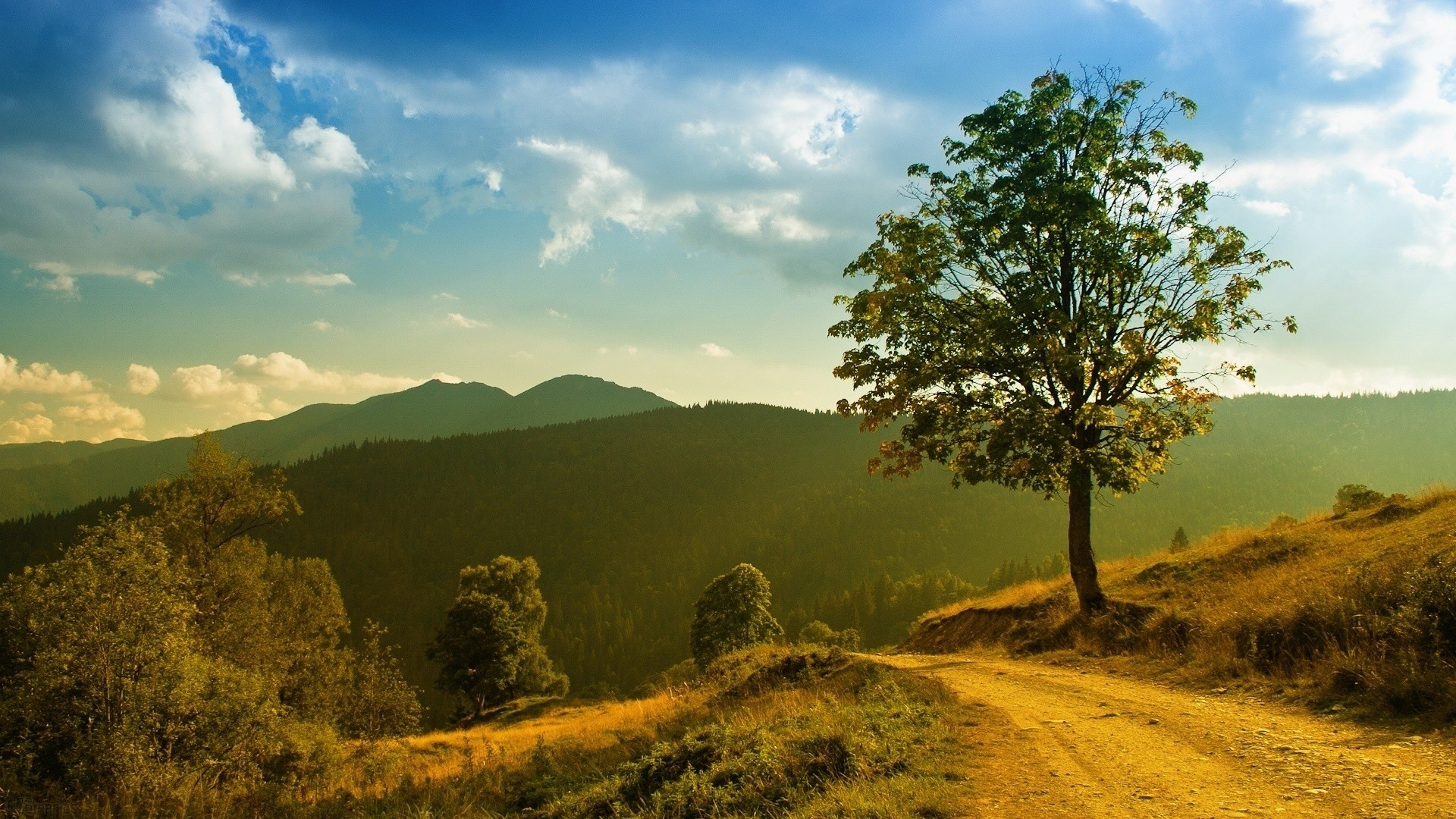 Landscapes nature Trees roads HD Wallpaper