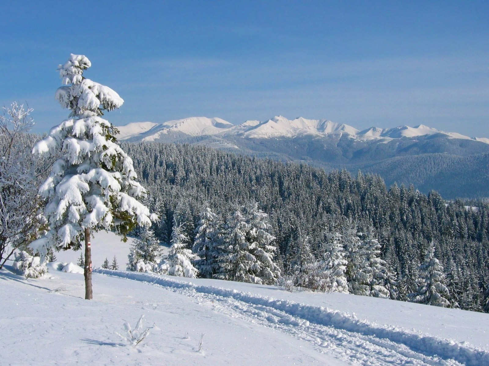 Landscapes snow forests trail HD Wallpaper