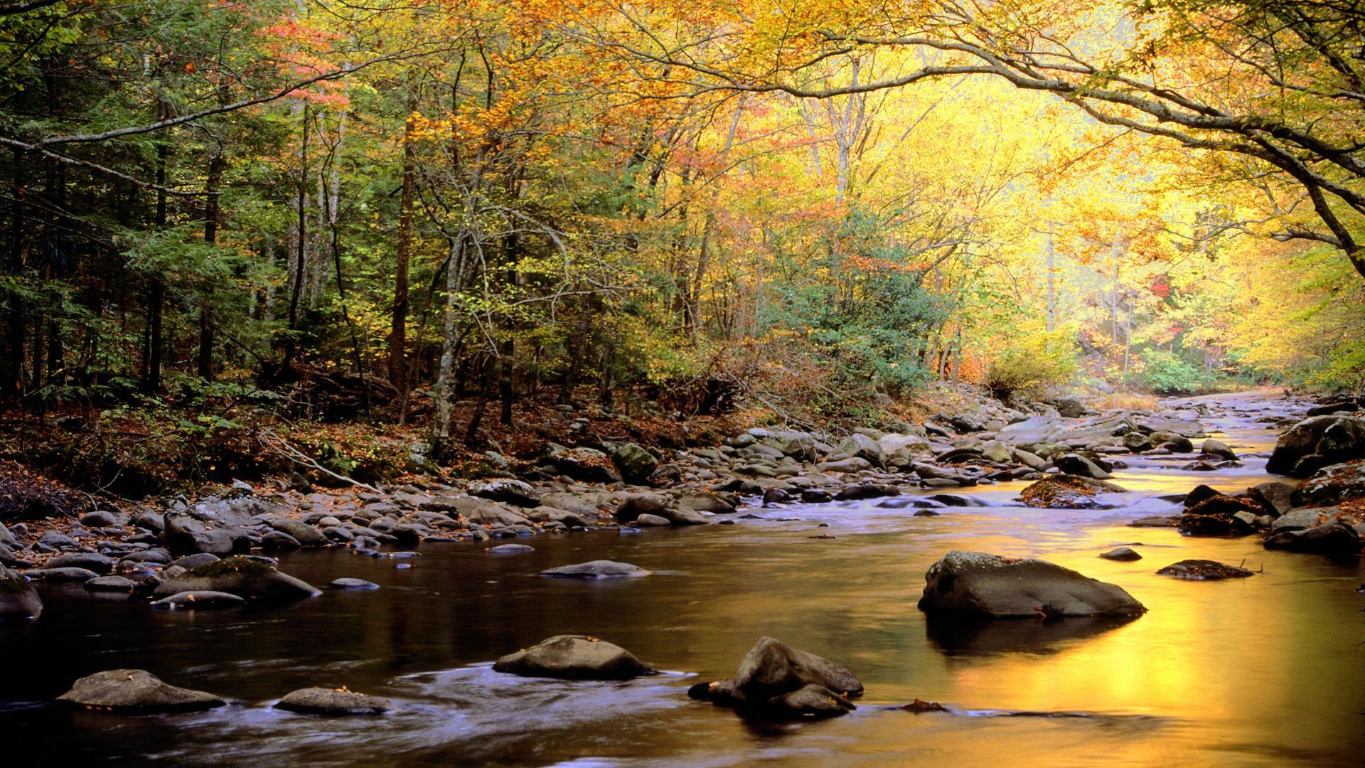Landscapes Trees forest rivers HD Wallpaper