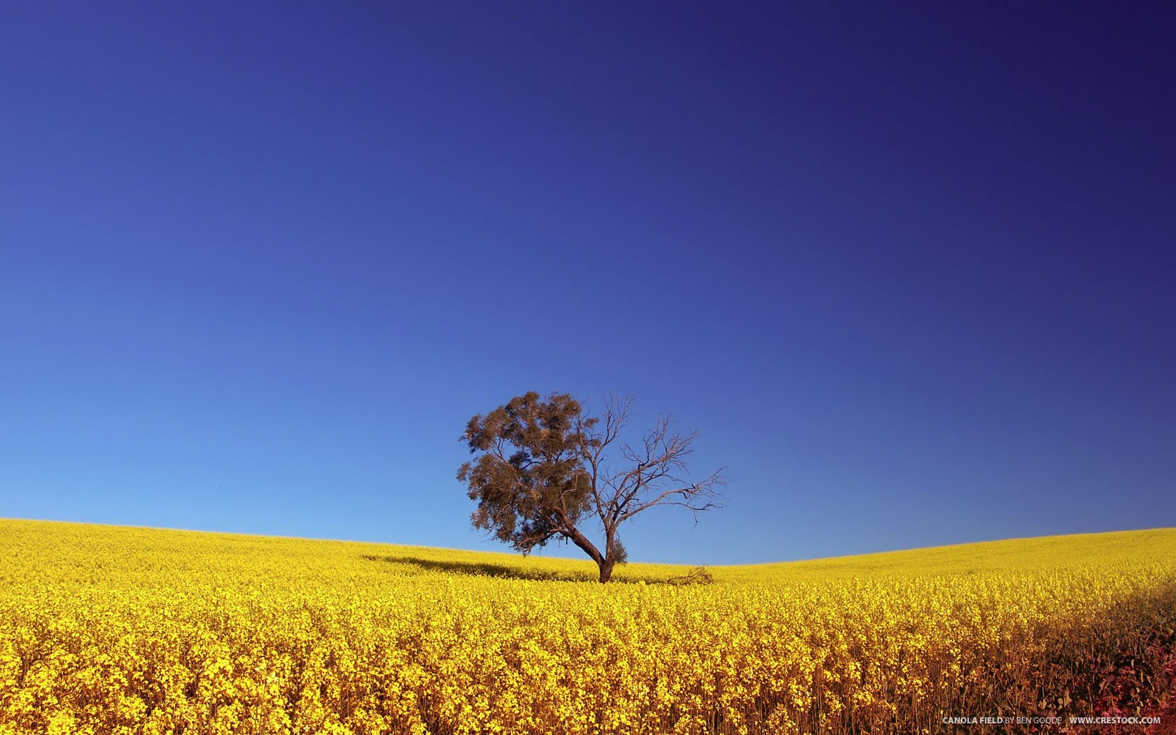 Landscapes Trees meadows fields yellow flowers HD Wallpaper