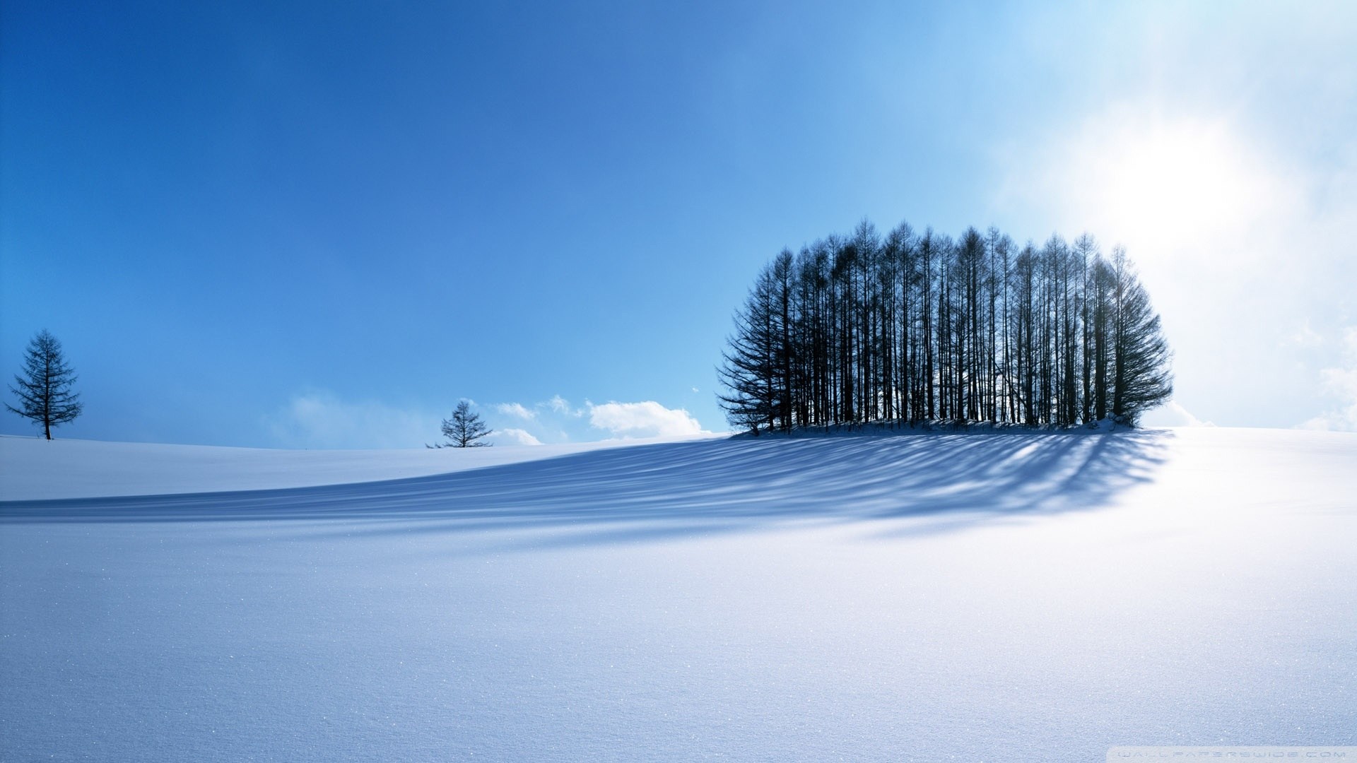 Landscapes winter snow Trees HD Wallpaper