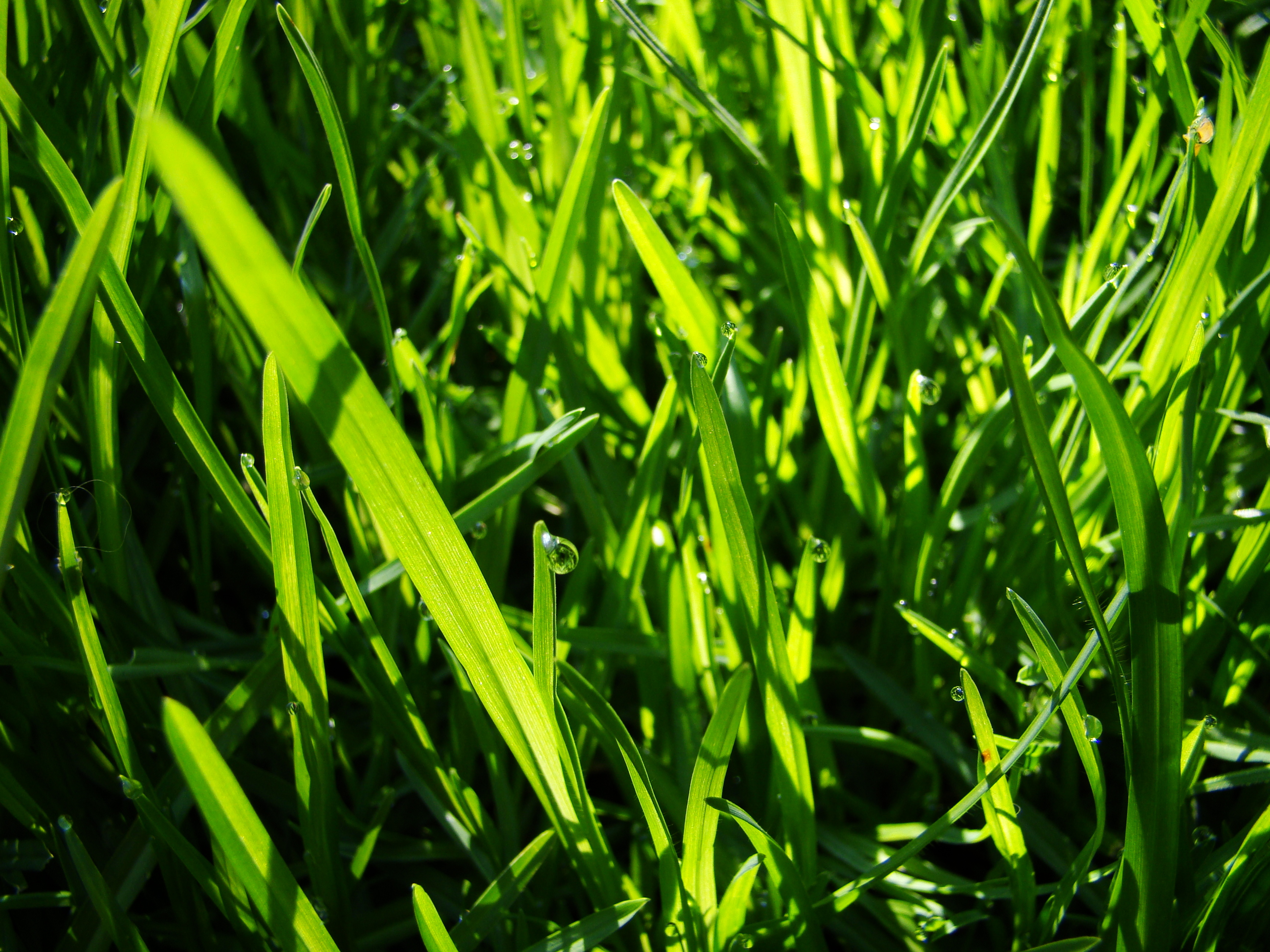 lawn one of My HD Wallpaper