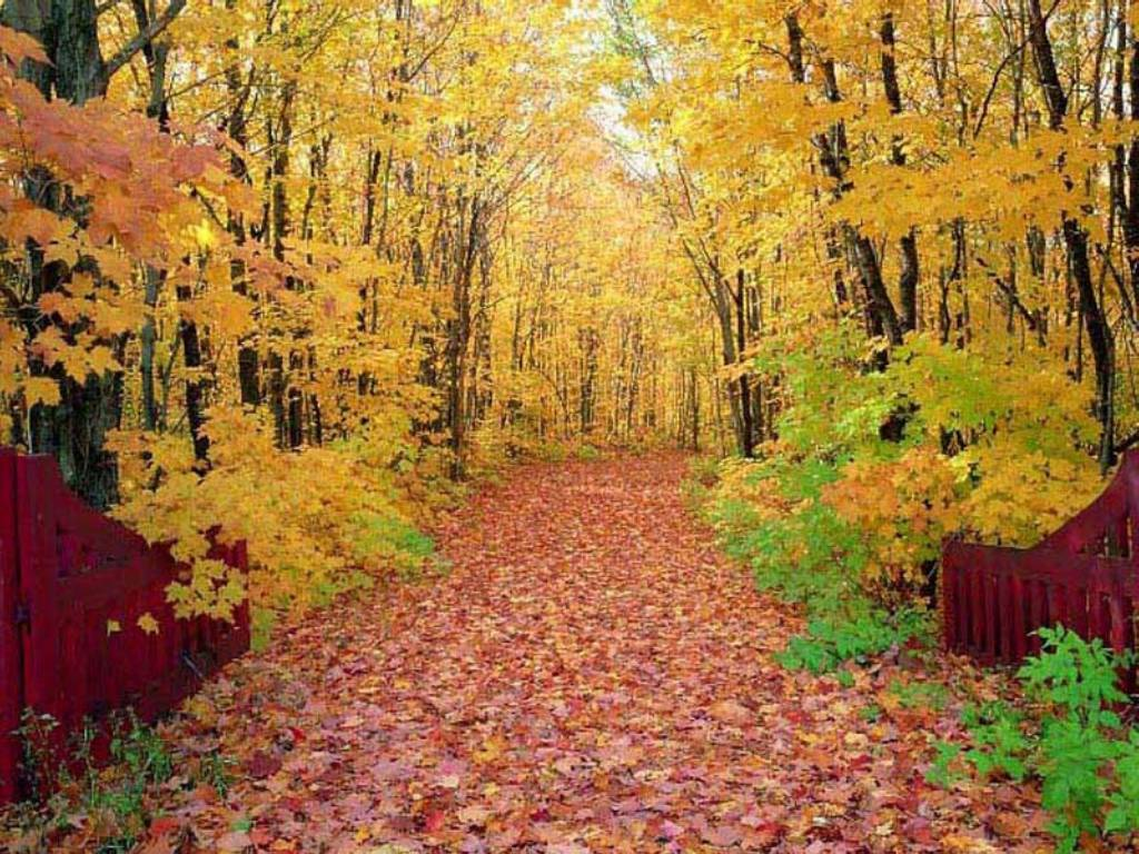 leaf Trees autumn forest HD Wallpaper