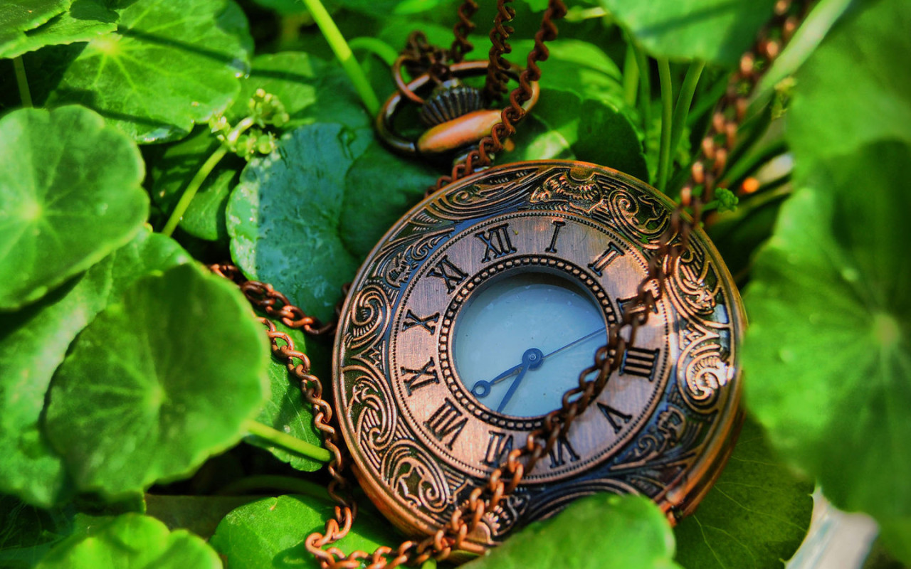 leaves pocket watch watches HD Wallpaper
