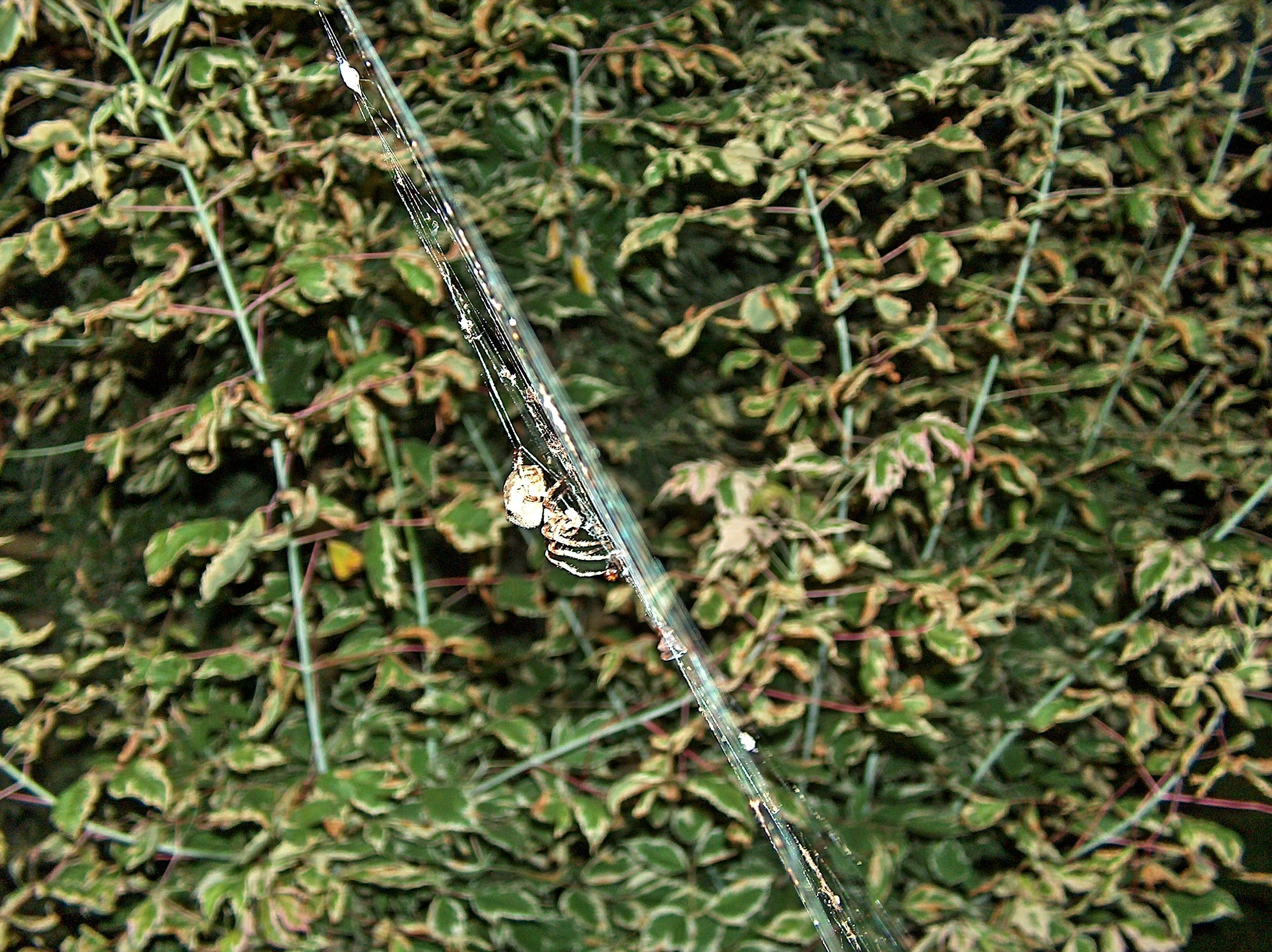 leaves spiders spider webs HD Wallpaper