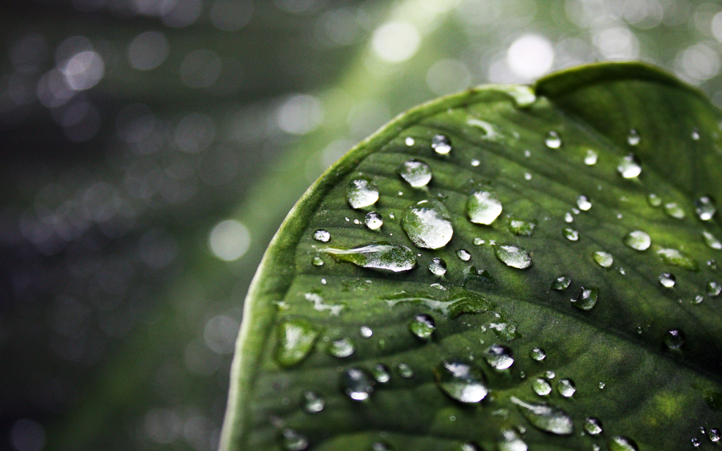 leaves water drops dew HD Wallpaper