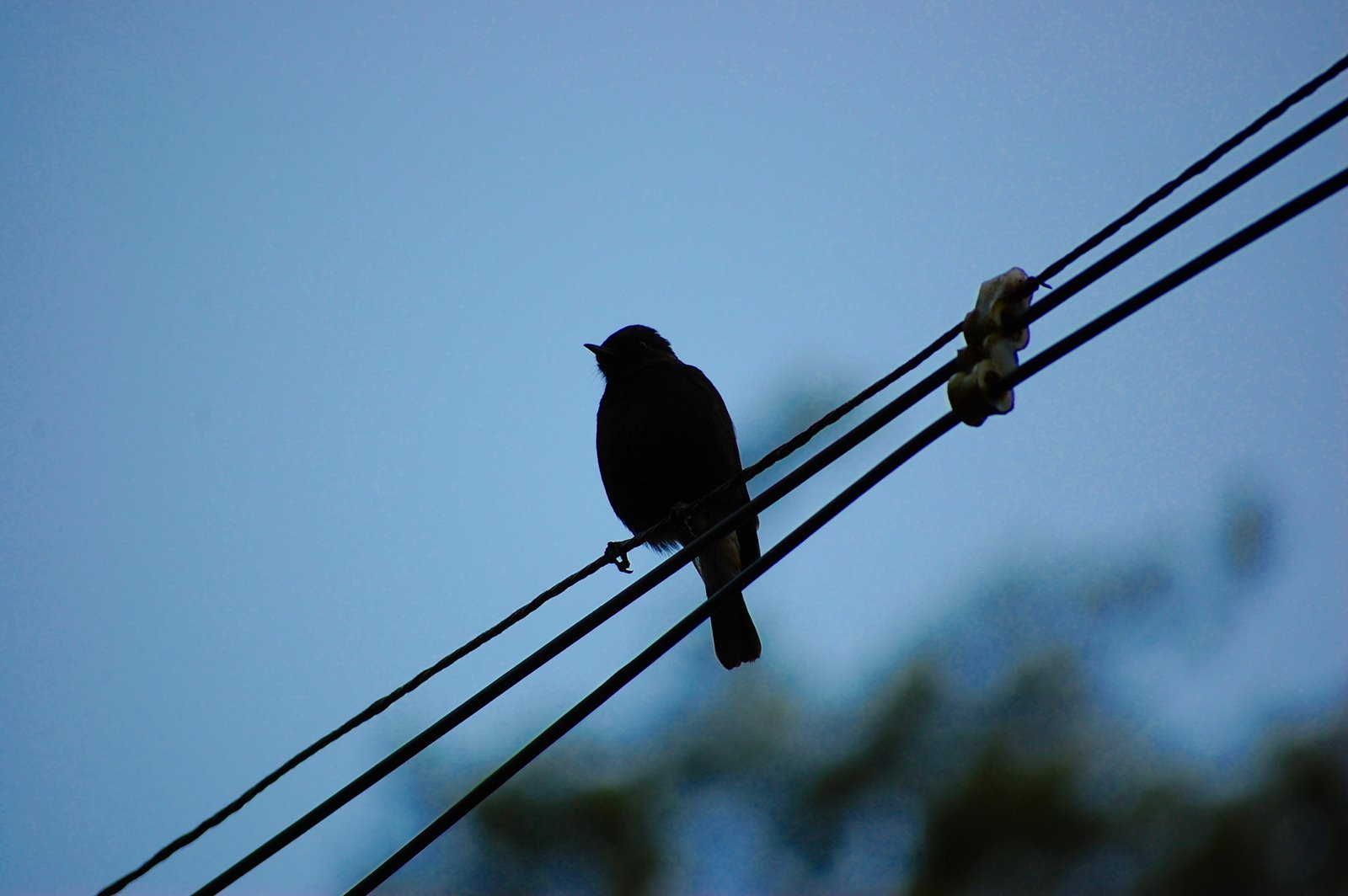 lines Birds silhouette power HD Wallpaper