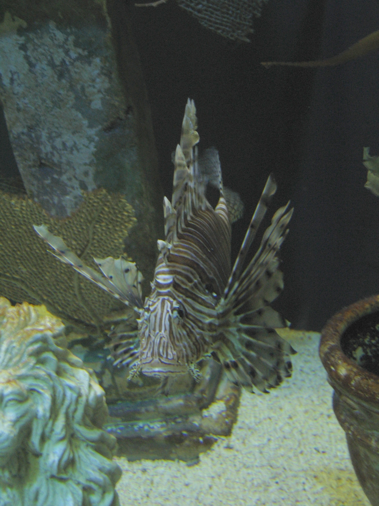lionfish aquarium of The HD Wallpaper