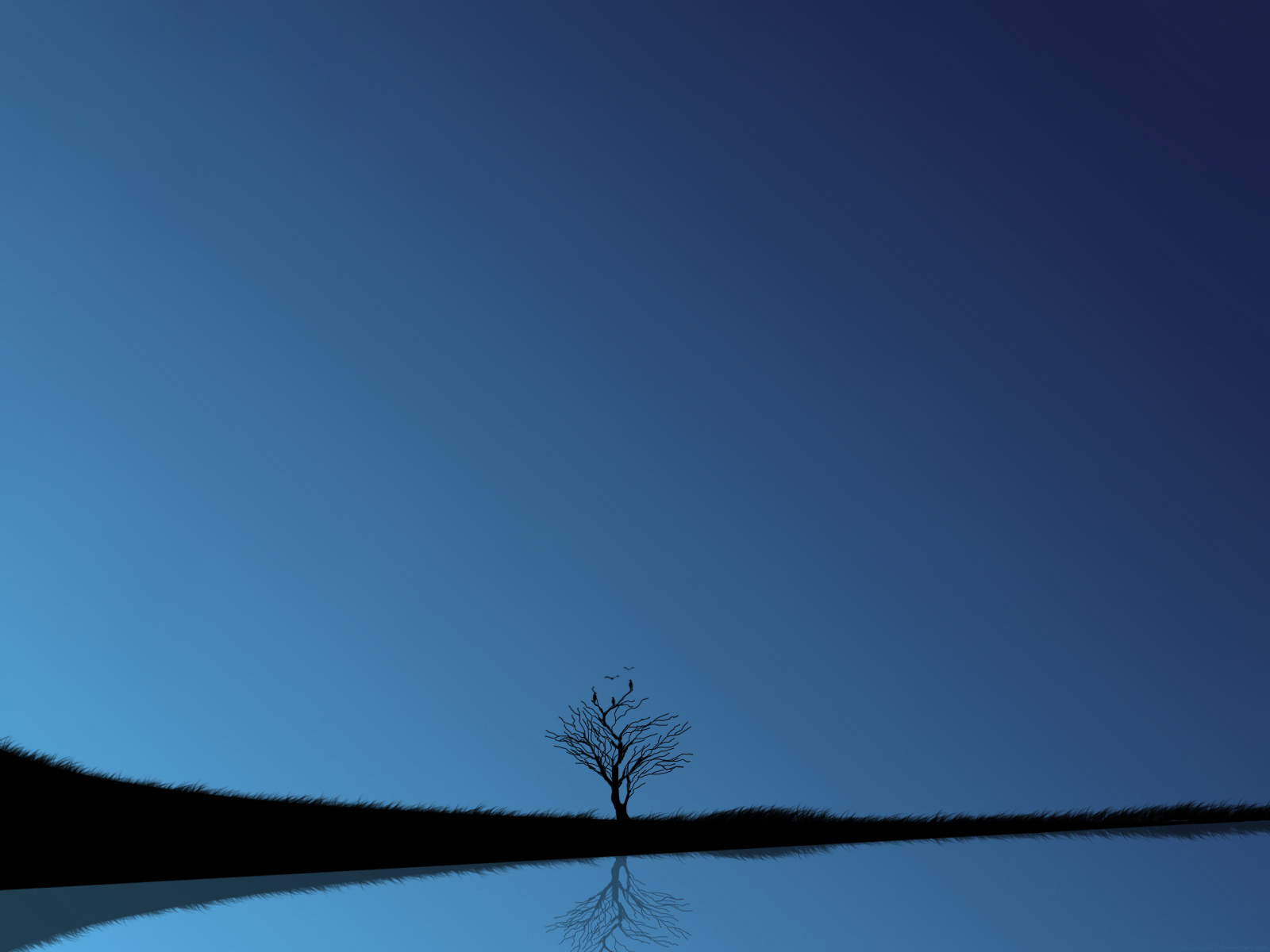 lonely tree blue nature HD Wallpaper