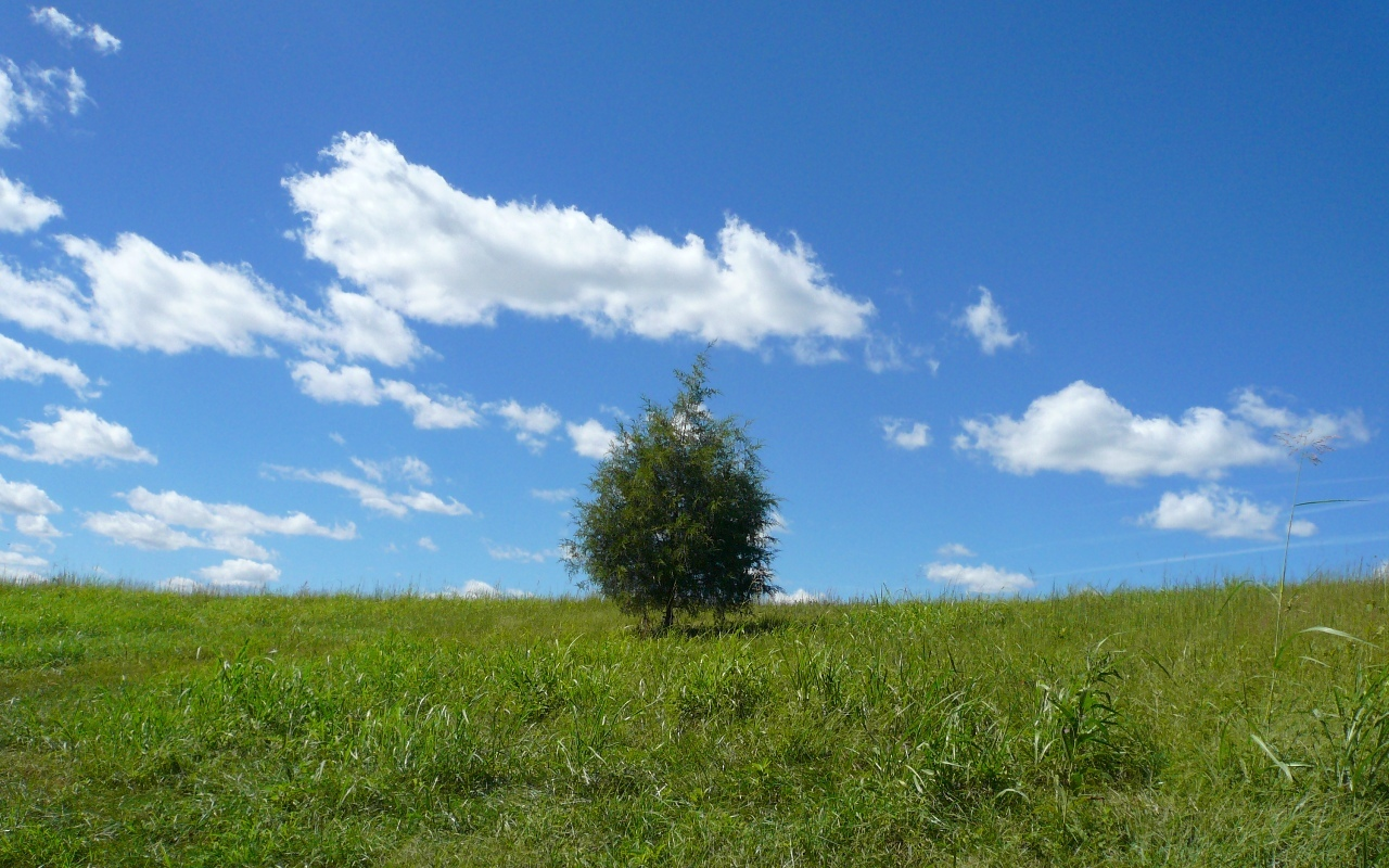 lonely tree took nature HD Wallpaper