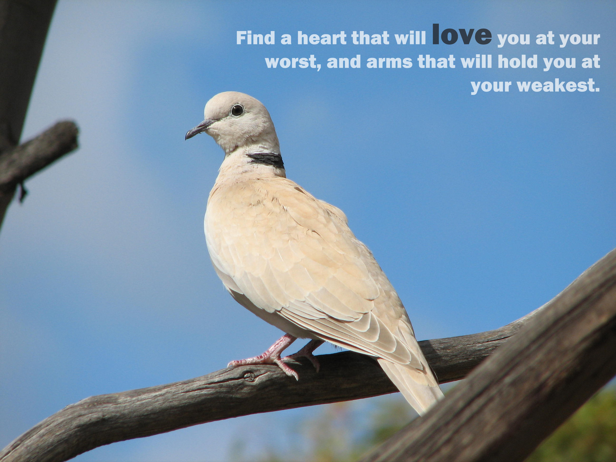 love doves Quotes quote HD Wallpaper