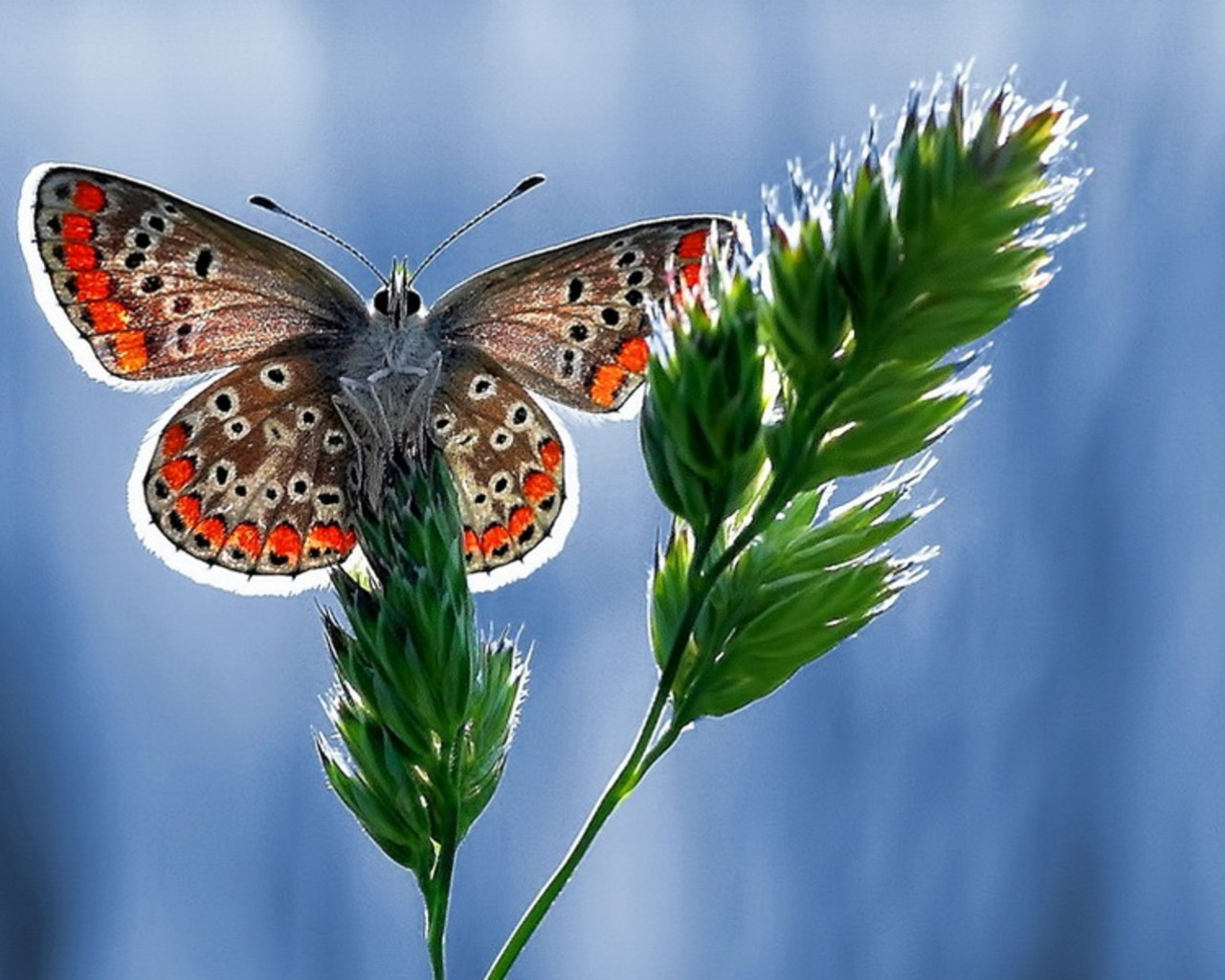 macro Animals Butterflies insects HD Wallpaper