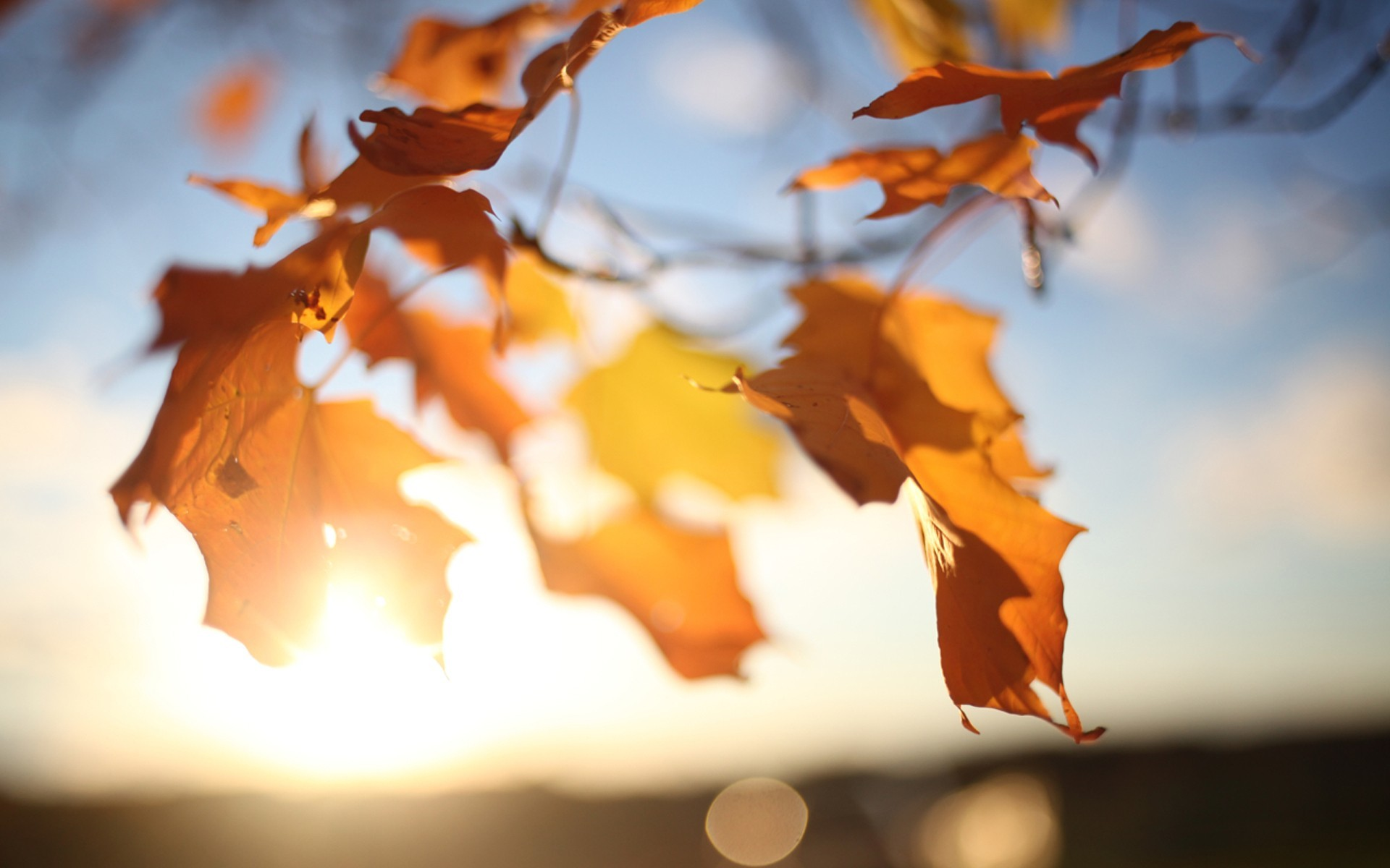macro leaves nature sun autumn sunlight HD Wallpaper