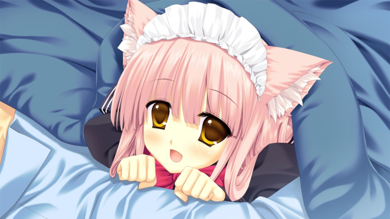 maids beds nekomimi pink HD Wallpaper
