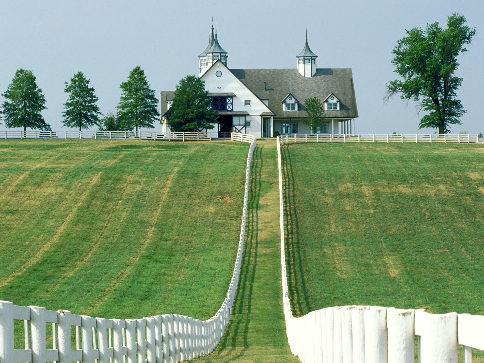 Manchester farm lexington Kentucky HD Wallpaper