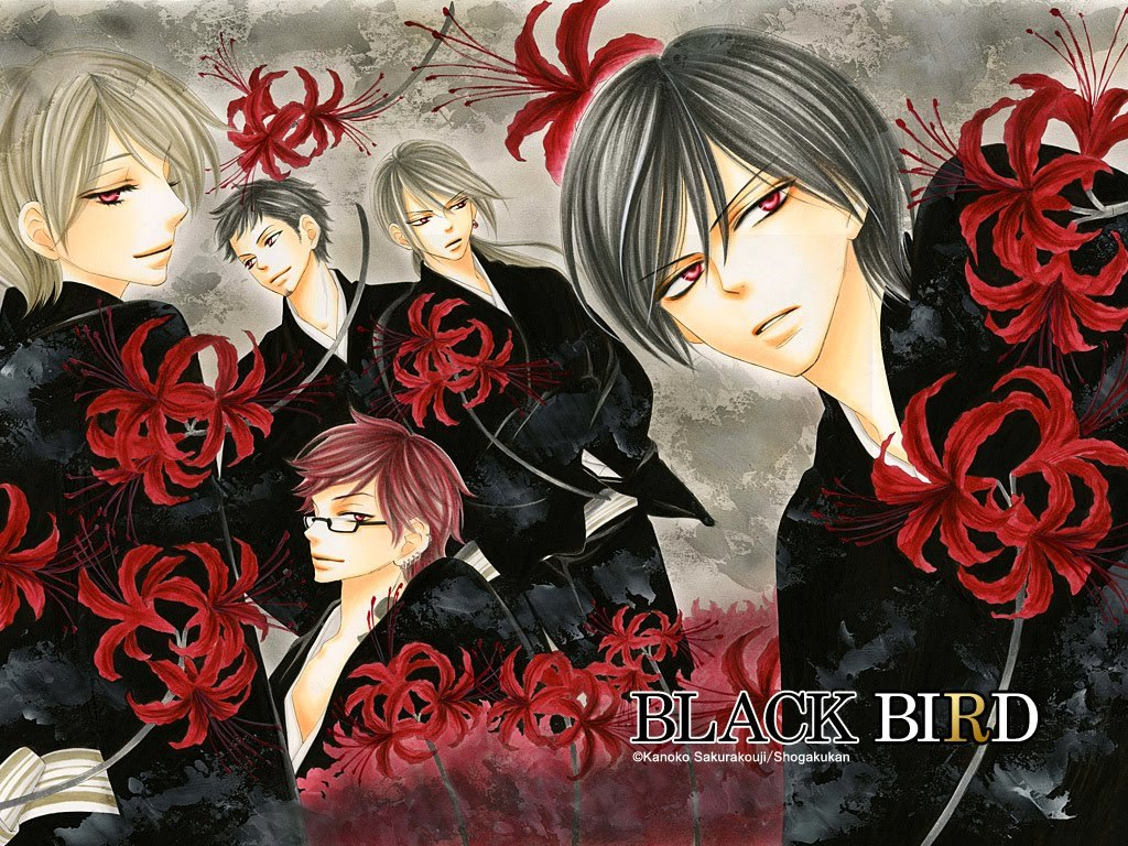 Manga black bird Anime HD Wallpaper