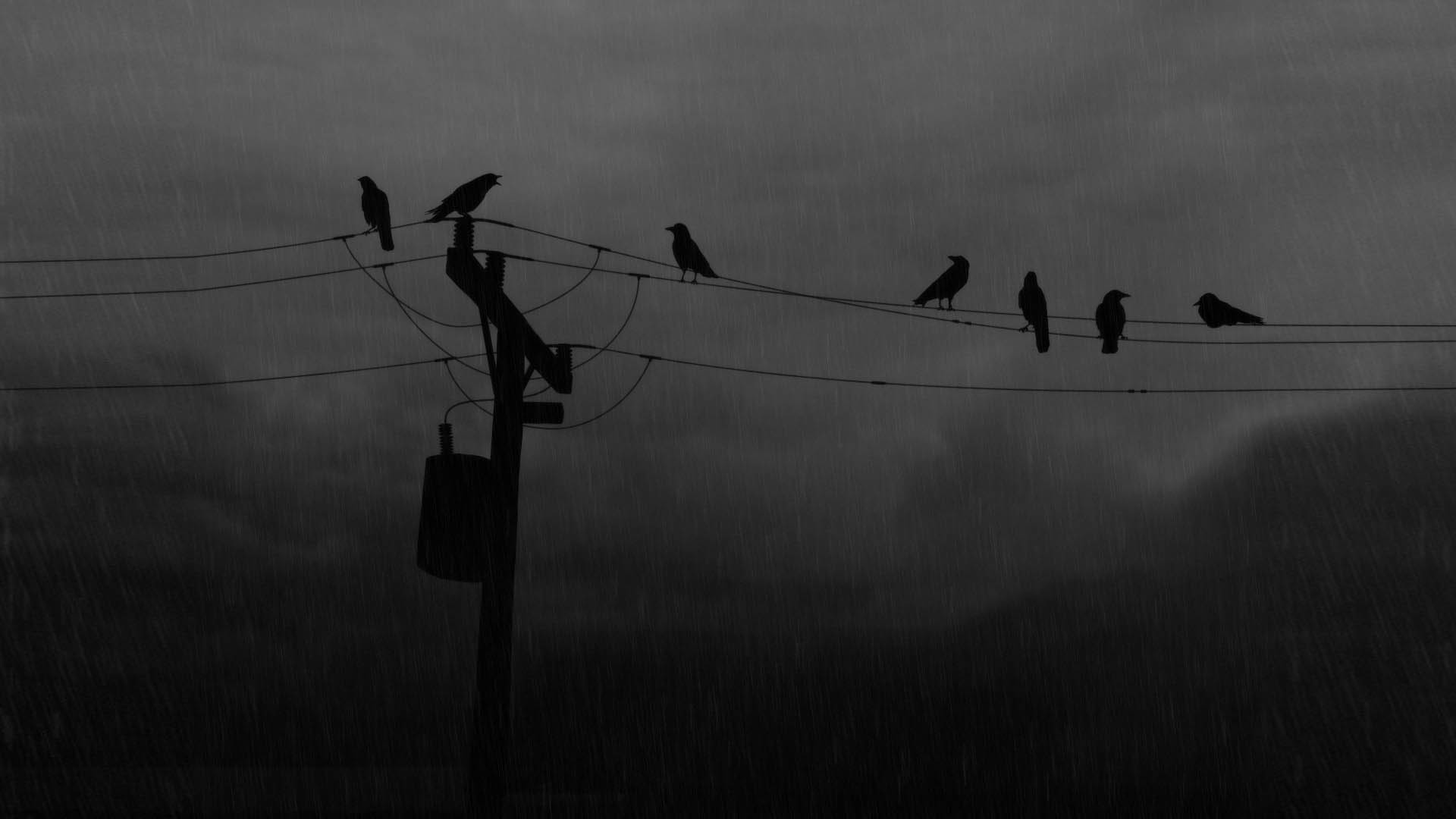 monochrome crows greyscale rain HD Wallpaper