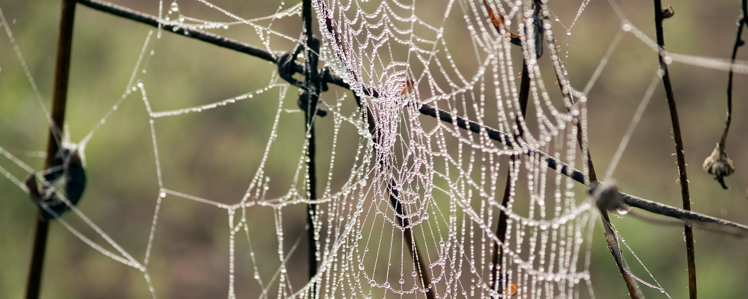 morning dew on spider HD Wallpaper