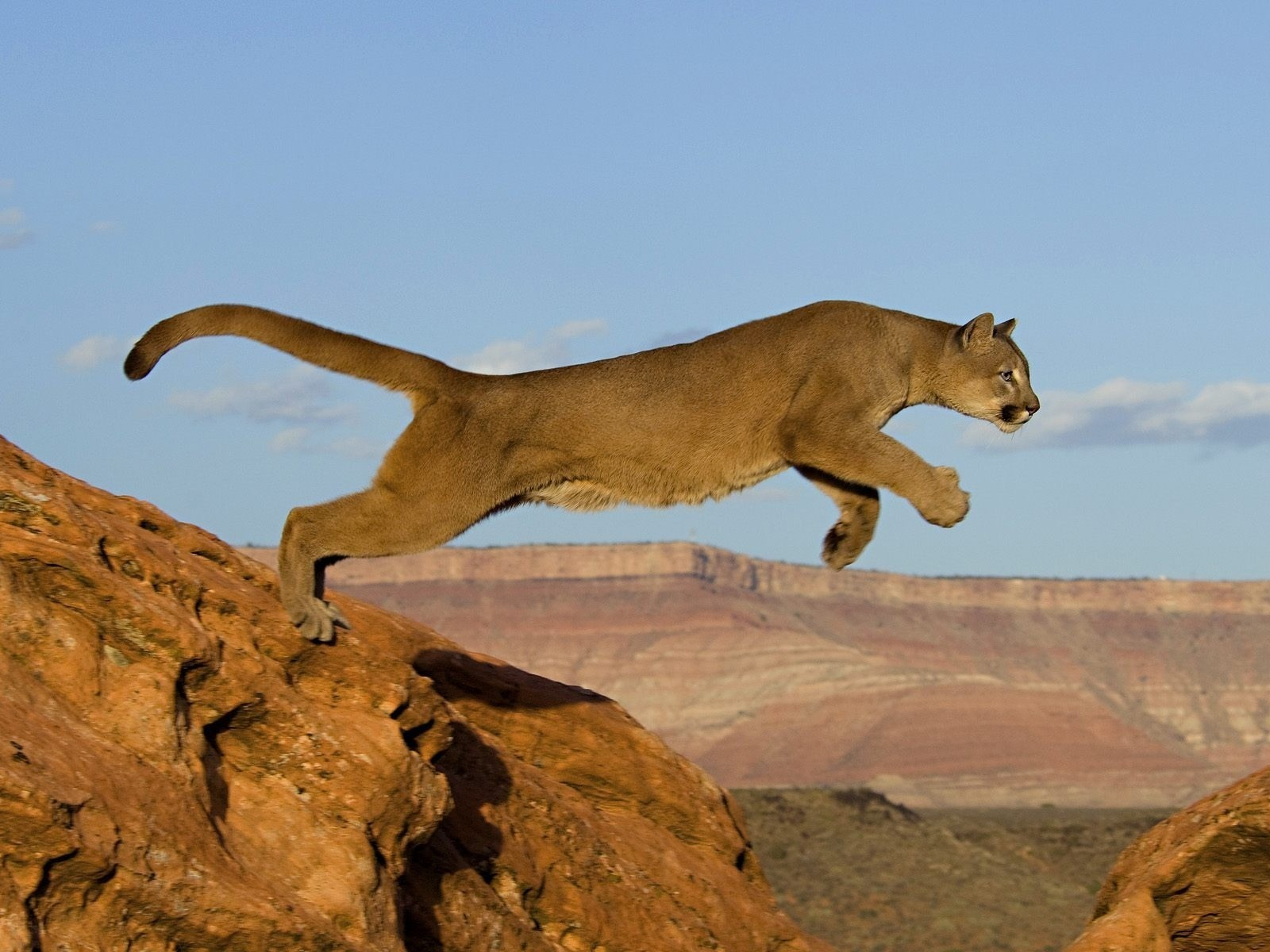 Mountains cats Animals jumping HD Wallpaper