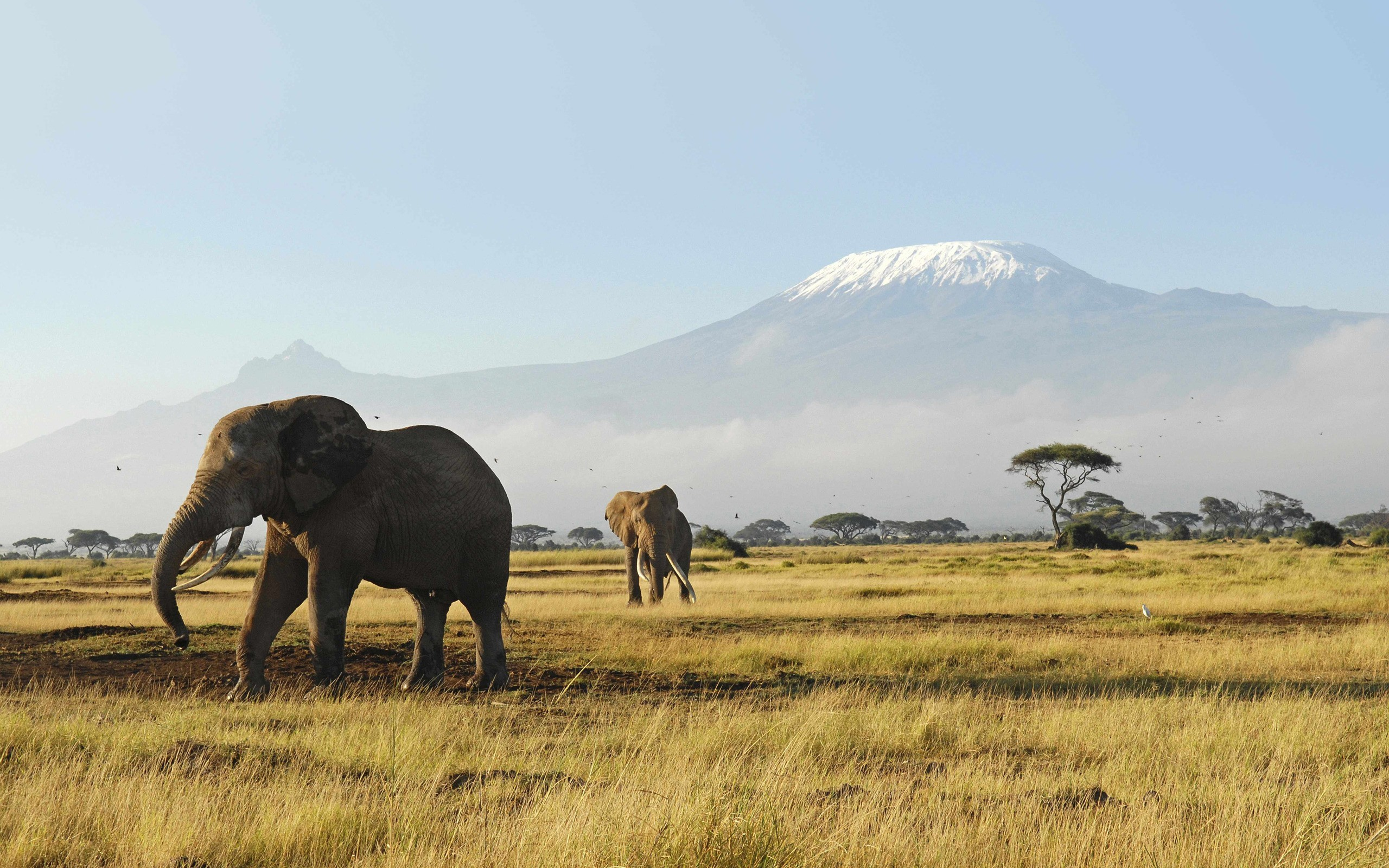 Mountains nature Animals elephants HD Wallpaper