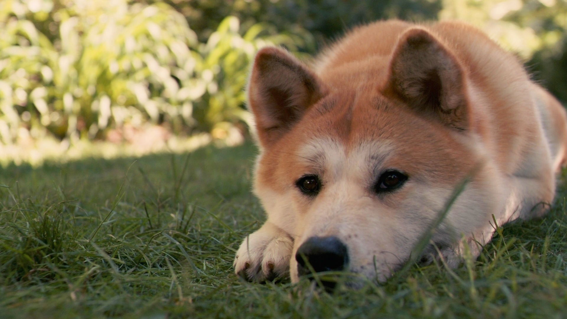 Movies Animals Dogs lying HD Wallpaper