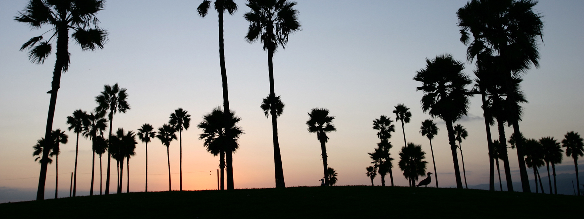 multi display venice beach HD Wallpaper