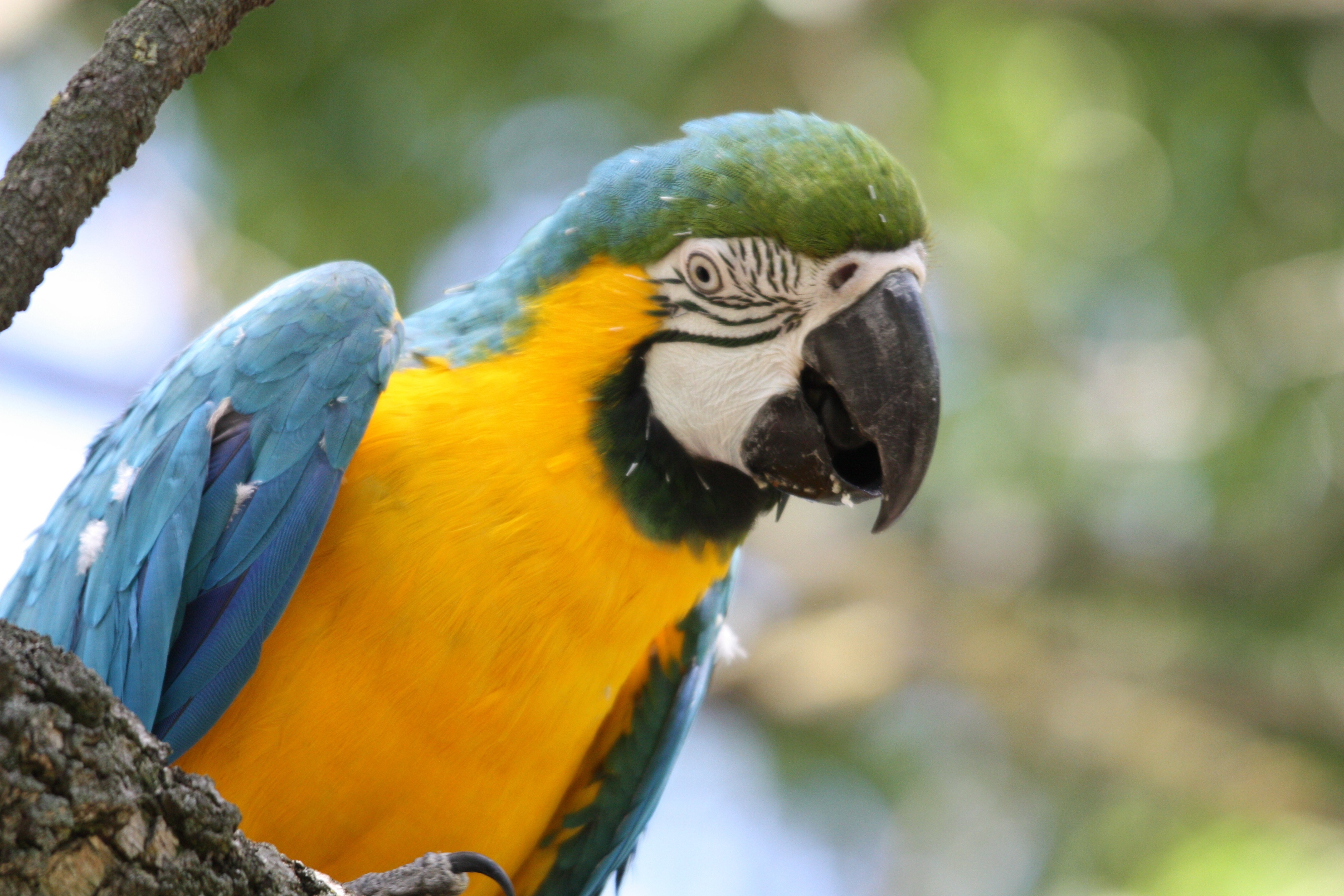 multicolor Birds wildlife Parrots HD Wallpaper
