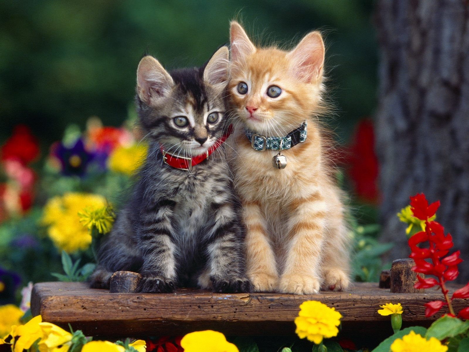 multicolor Flowers cats Animals