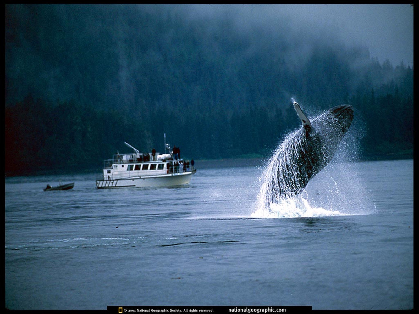 national geographic Whales HD Wallpaper