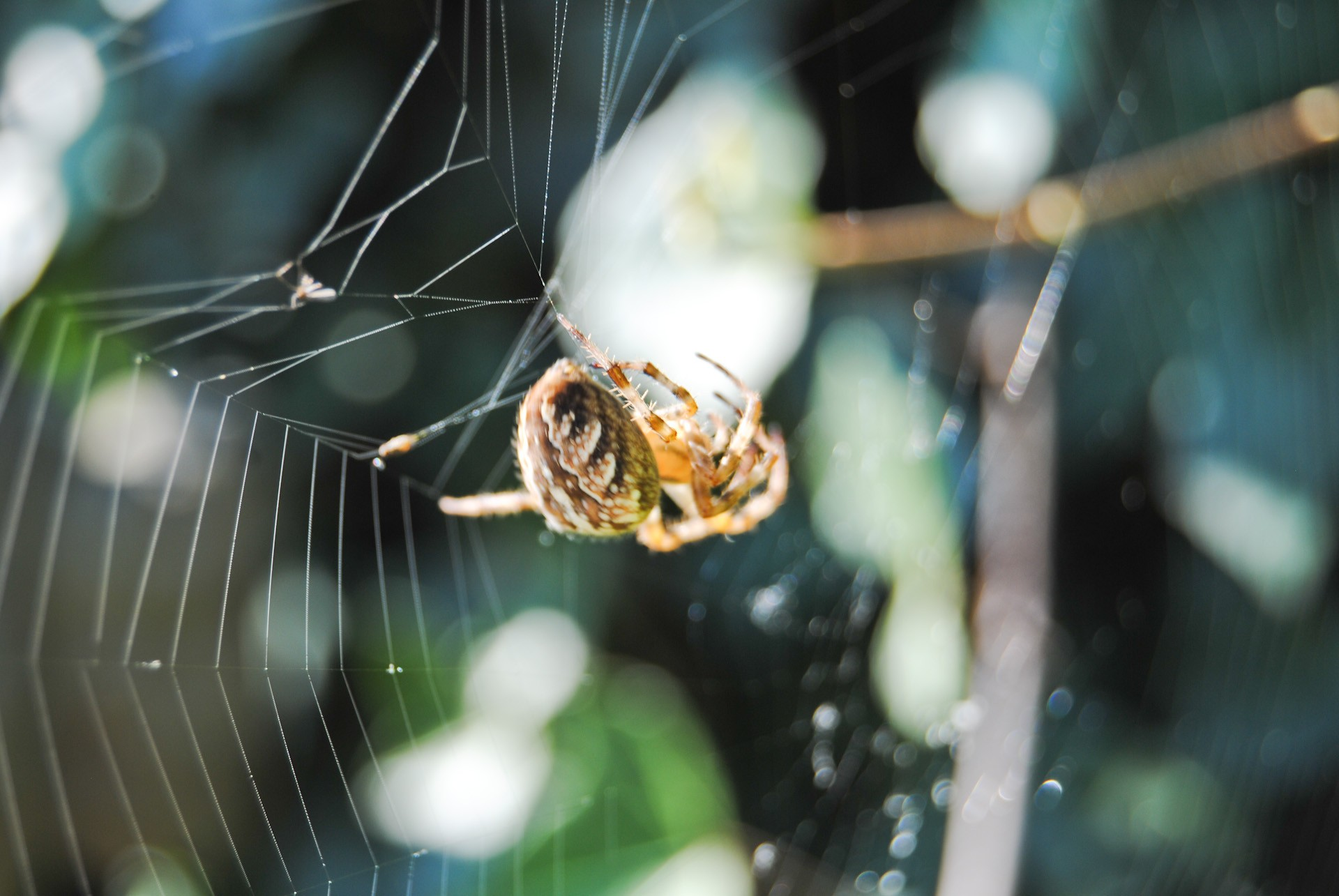 nature Animals spiders spider HD Wallpaper