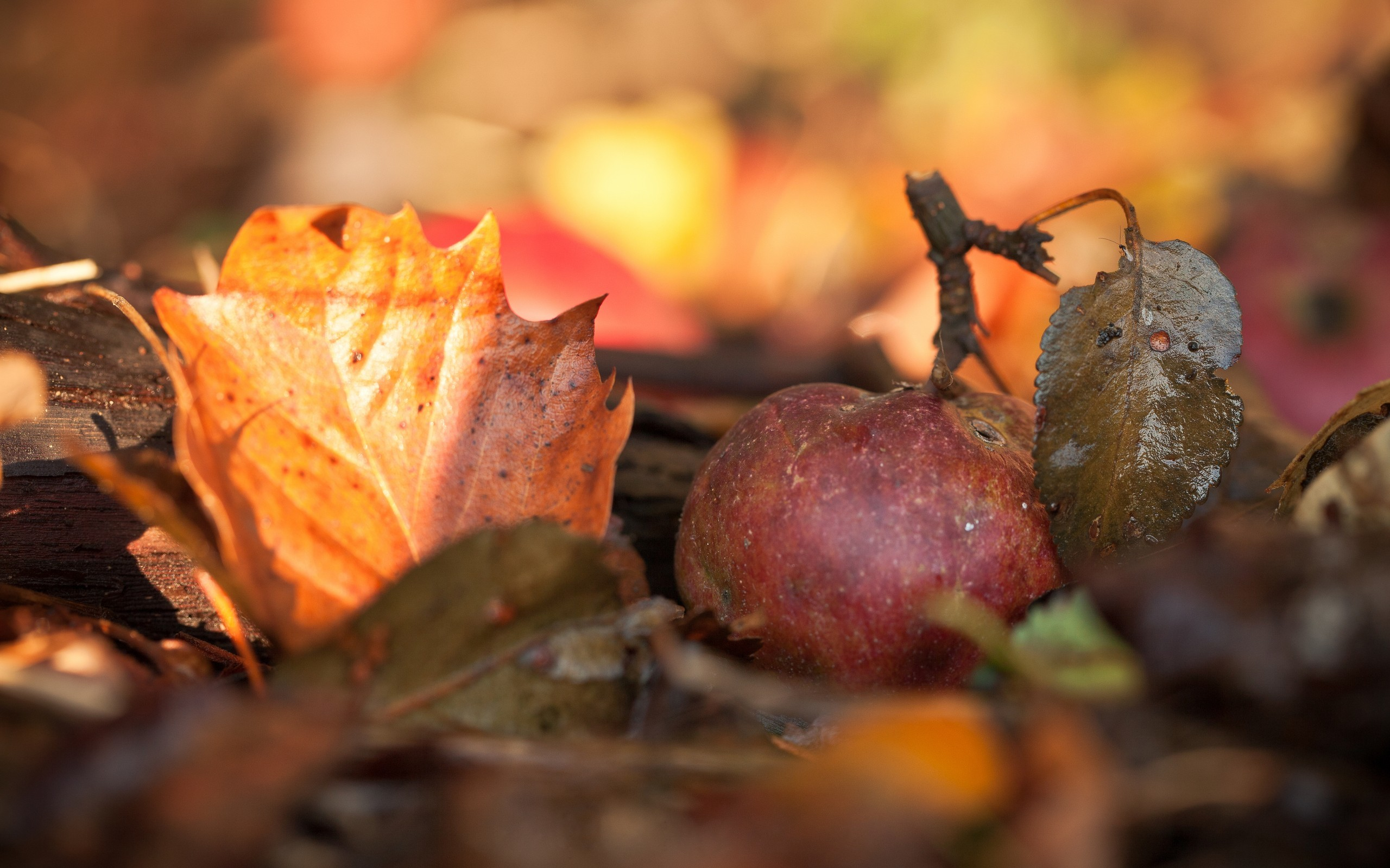 nature autumn macro depth HD Wallpaper
