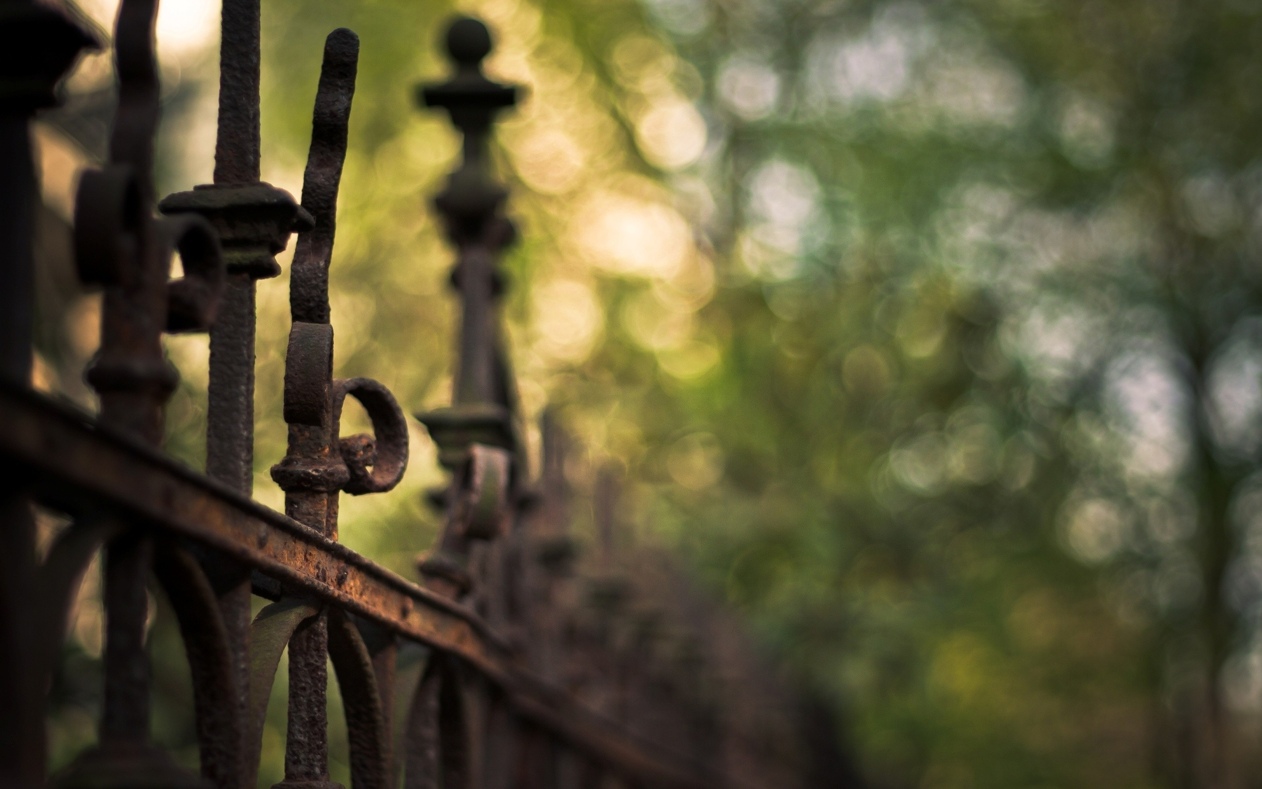 nature fences macro depth HD Wallpaper
