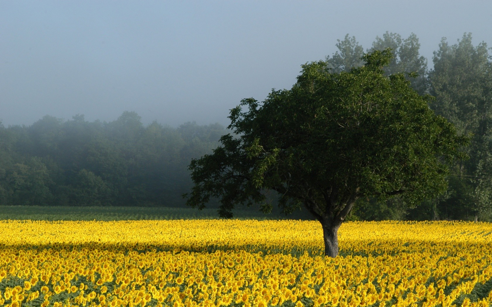 nature fields yellow flowers HD Wallpaper