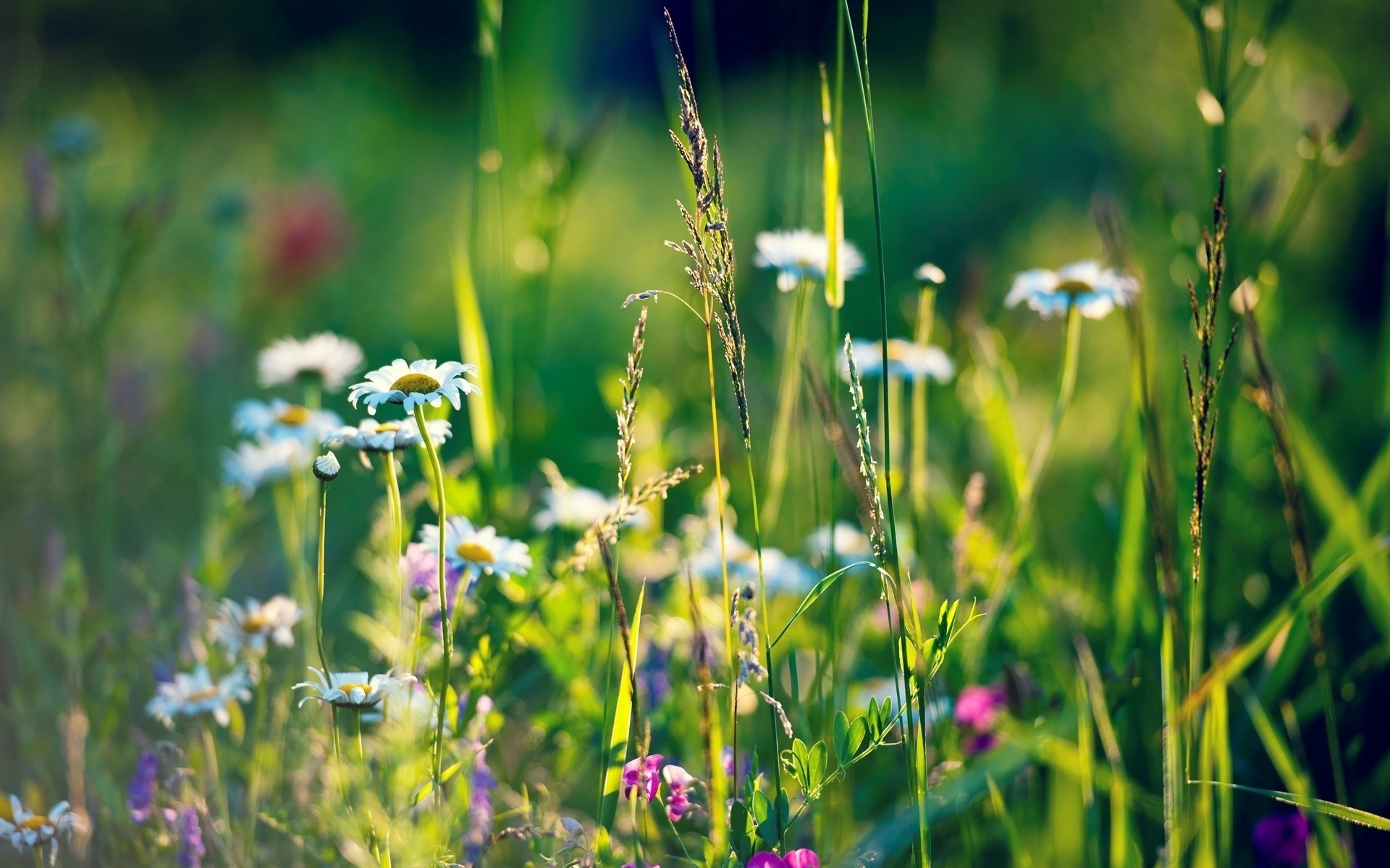 nature Flowers grass depth HD Wallpaper