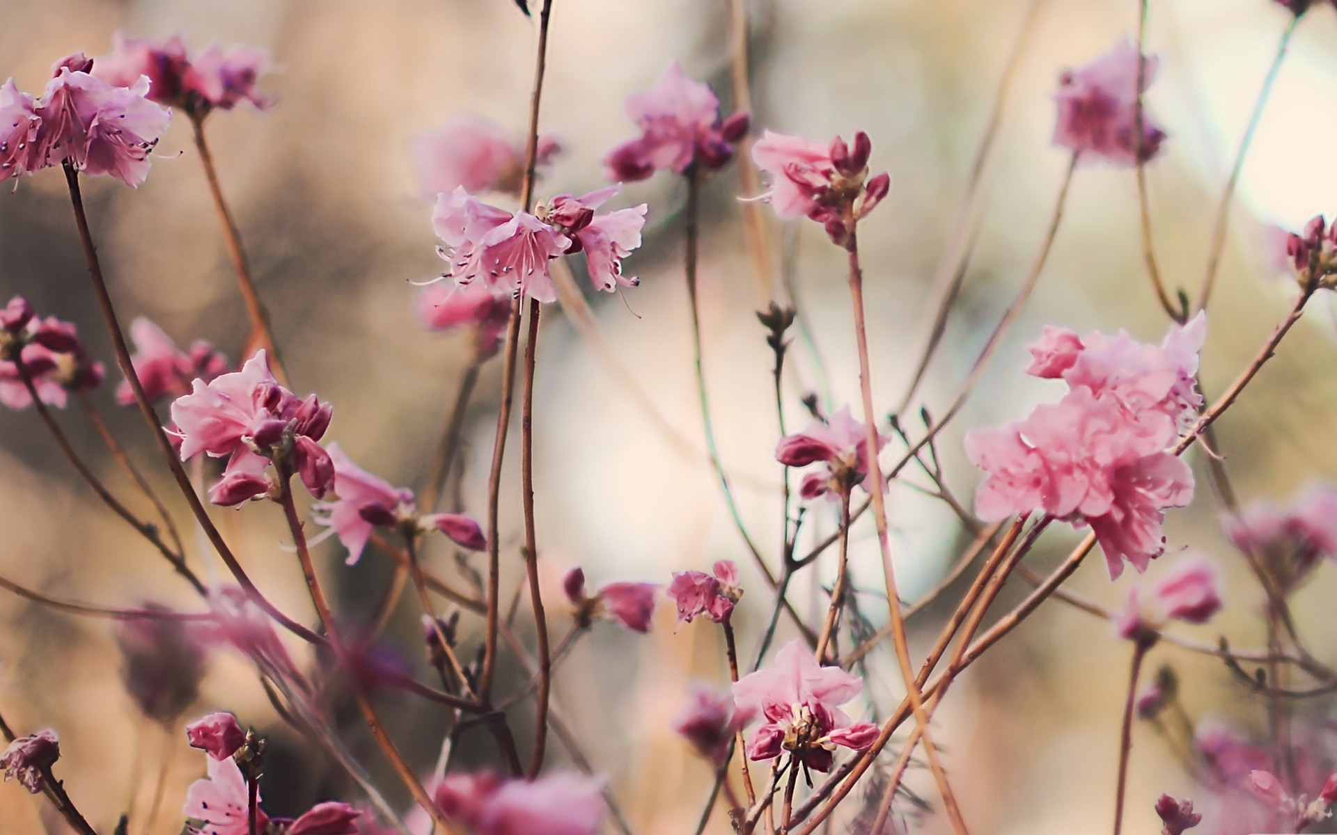 nature Flowers spring blossoms HD Wallpaper