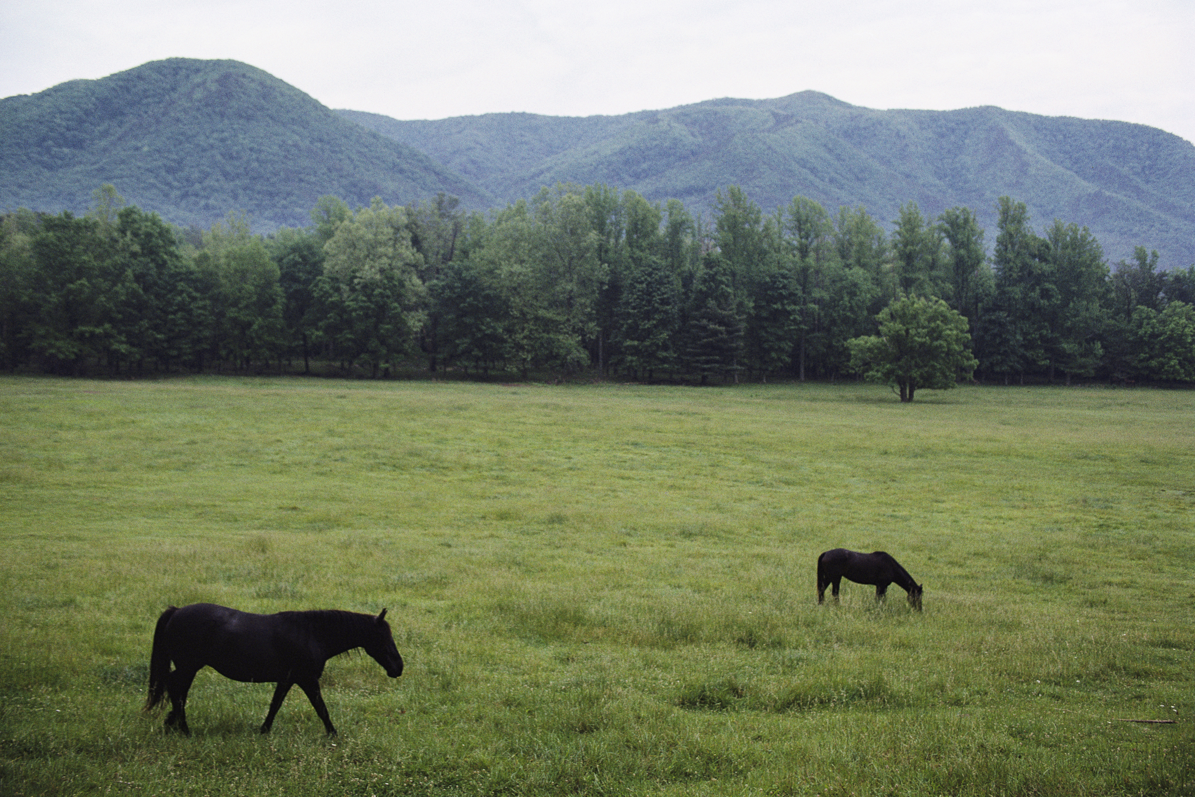 nature forests fields Horses
