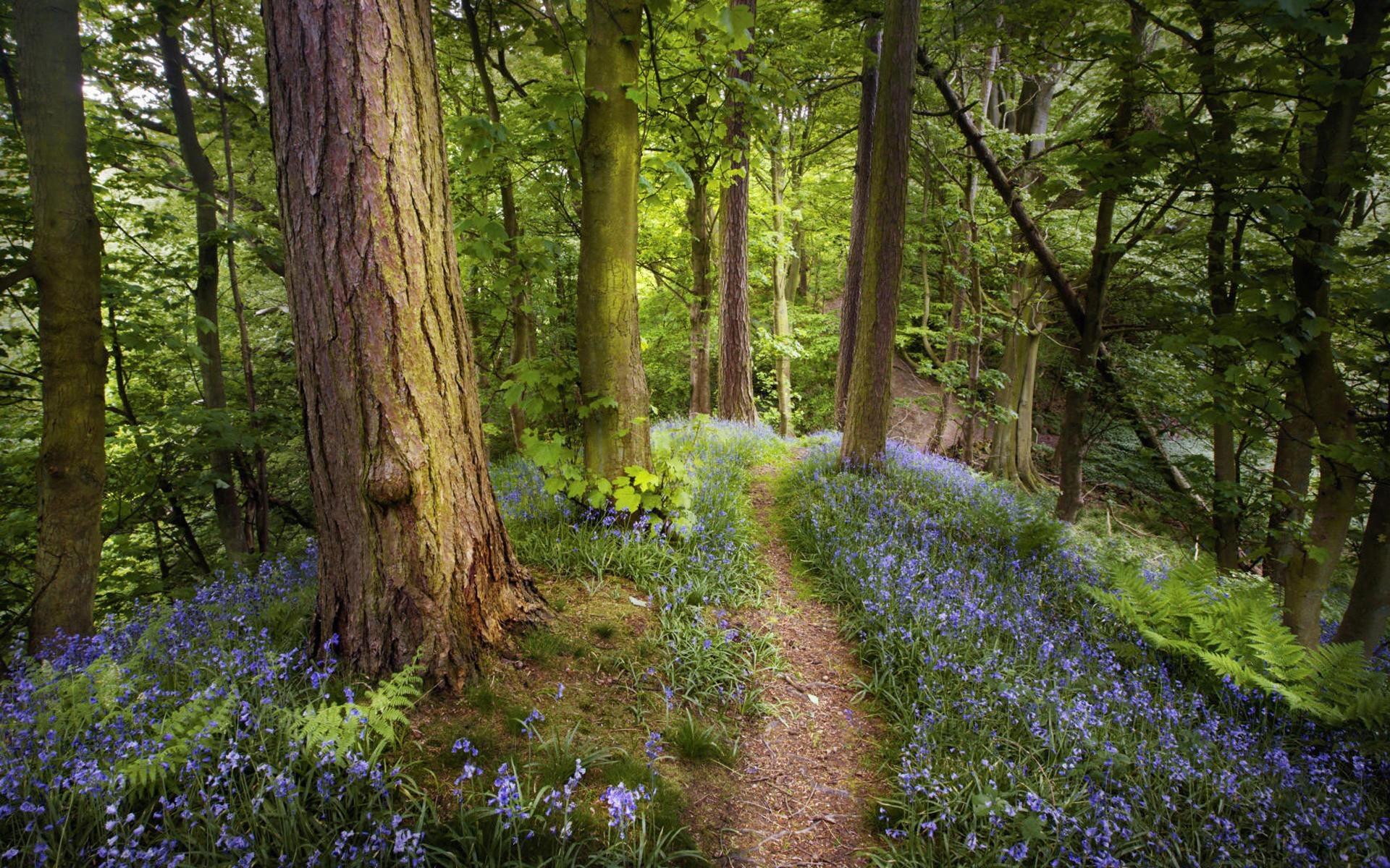 nature forests paths HD Wallpaper