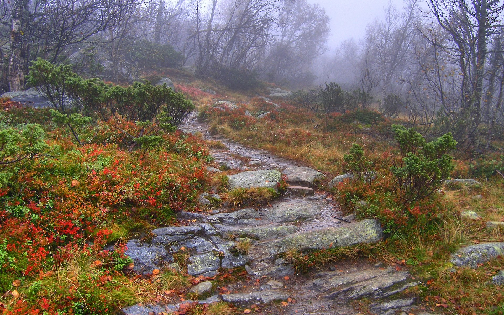 nature forests paths mist HD Wallpaper