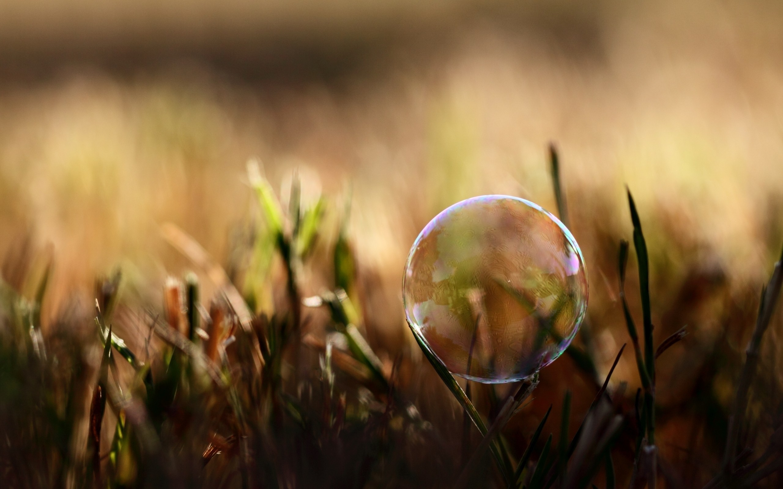 nature grass bubbles macro HD Wallpaper