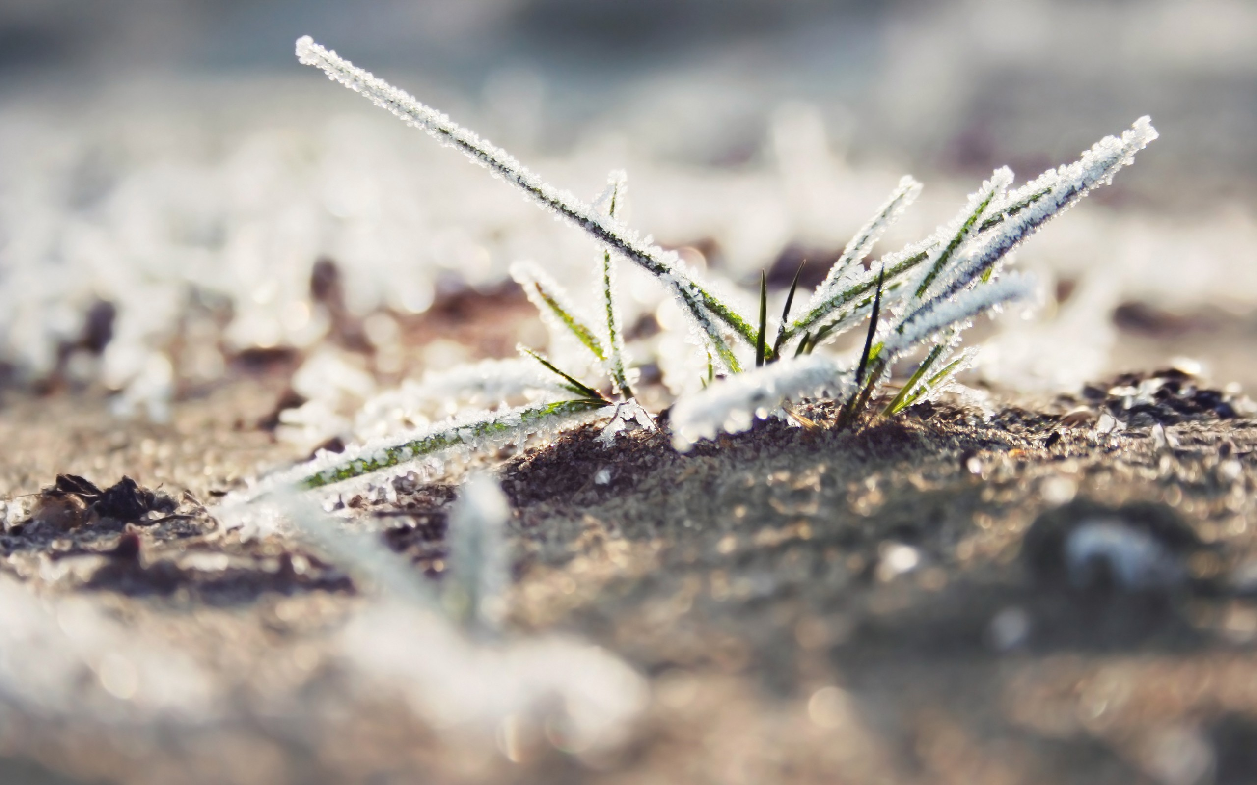 nature grass frost macro HD Wallpaper