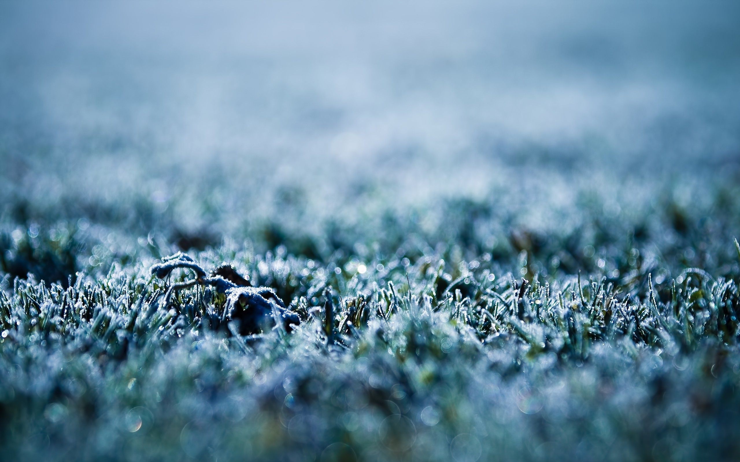 nature grass frost macro