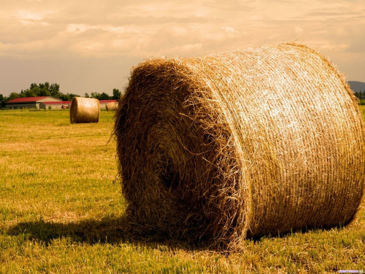 nature hay farming agriculture HD Wallpaper