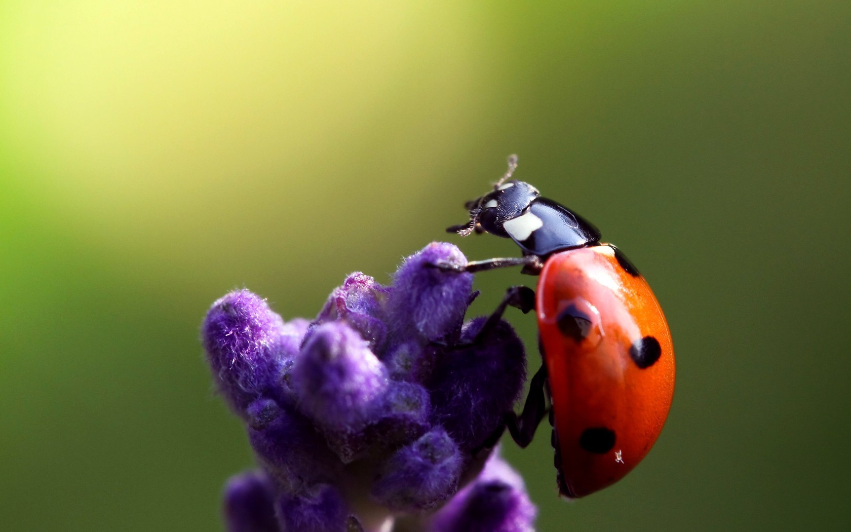 nature insects depth of HD Wallpaper
