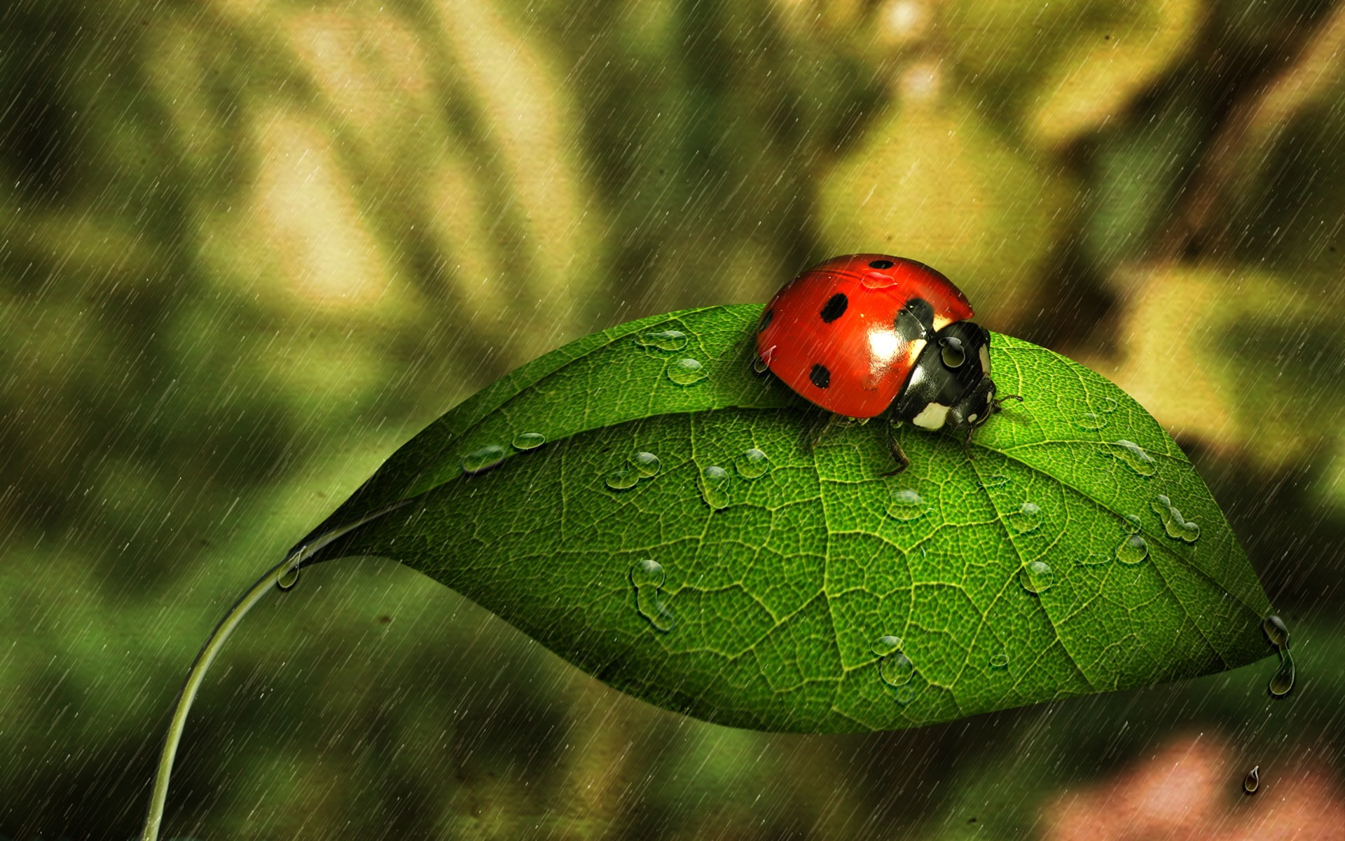nature insects leaves Beetles HD Wallpaper
