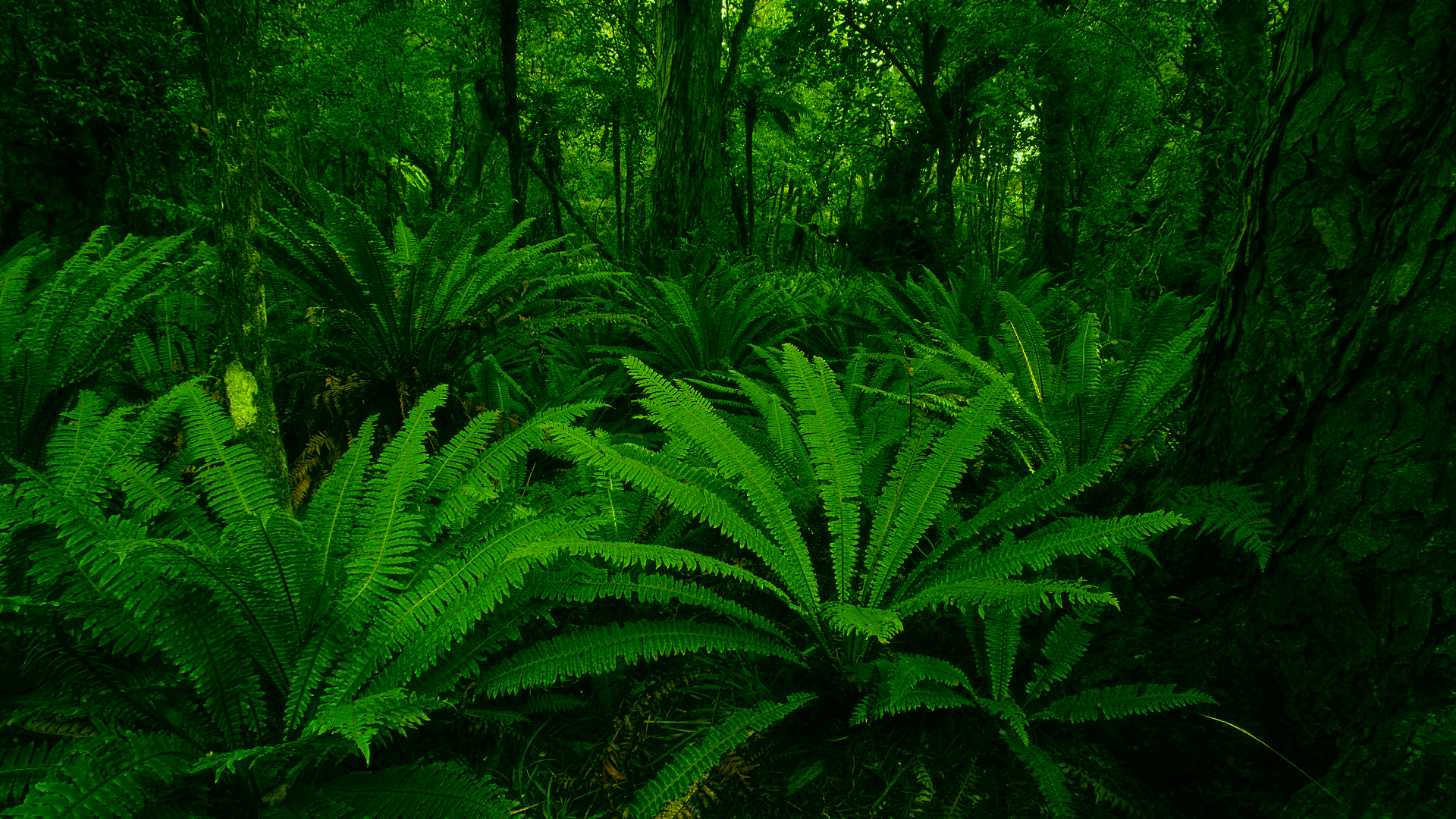 nature jungle forests HD Wallpaper