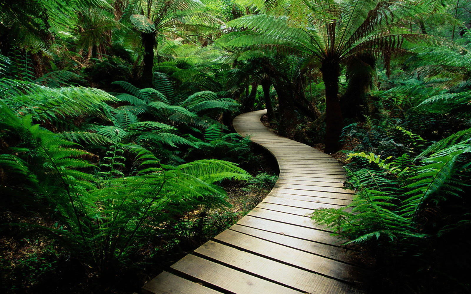 nature jungle forests paths HD Wallpaper