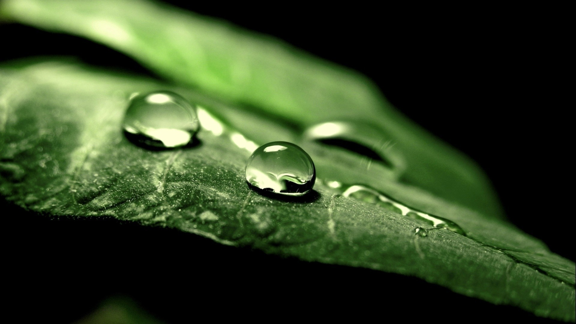 nature leaves water drops