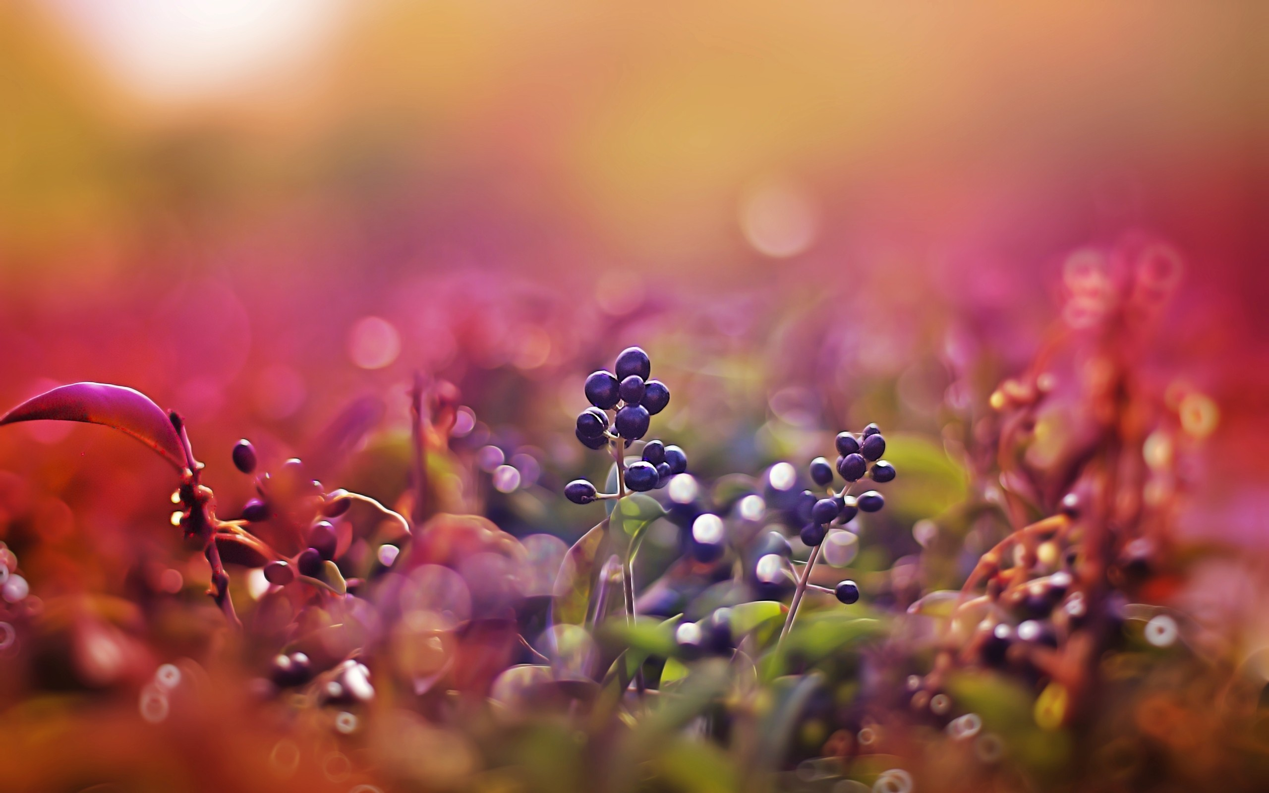 nature macro Berries blurred HD Wallpaper