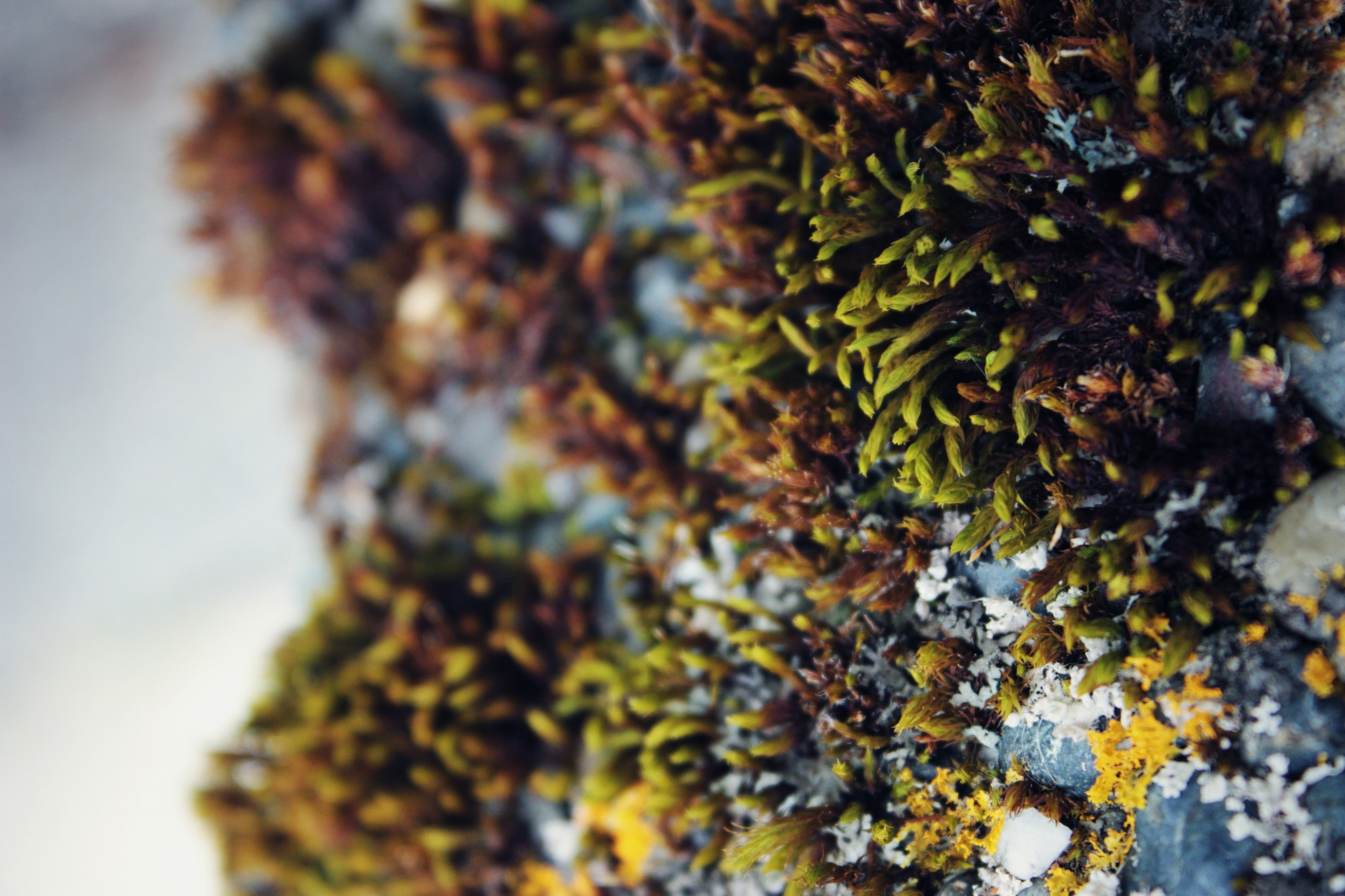 nature moss depth of